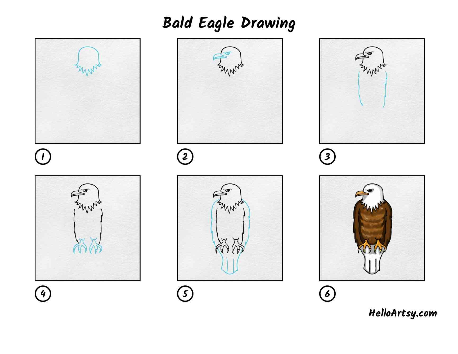 Bald Eagle Drawing: All Steps