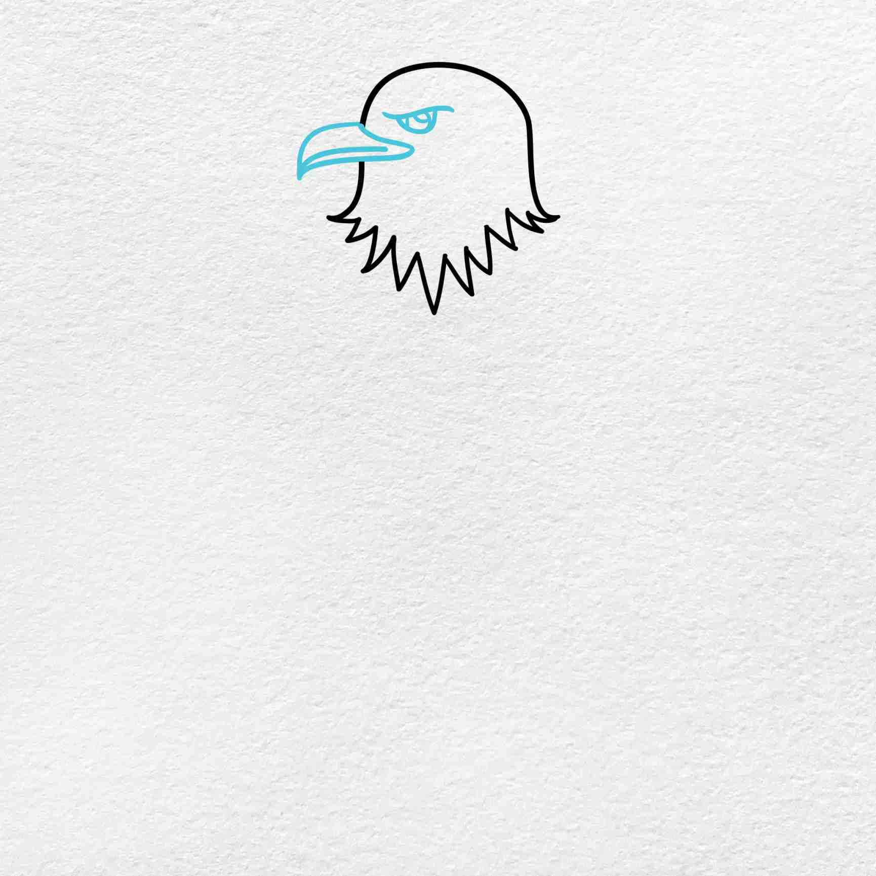 Bald Eagle Drawing: Step 2