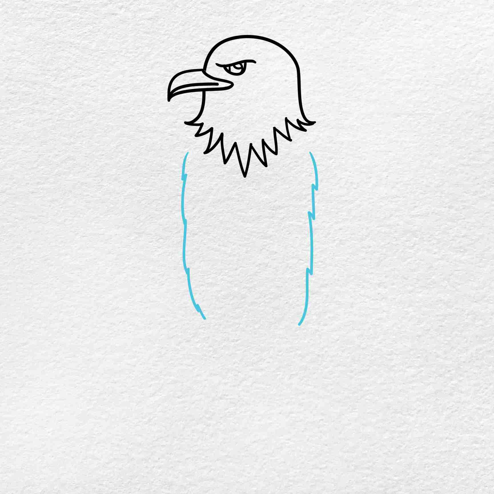 Bald Eagle Drawing: Step 3