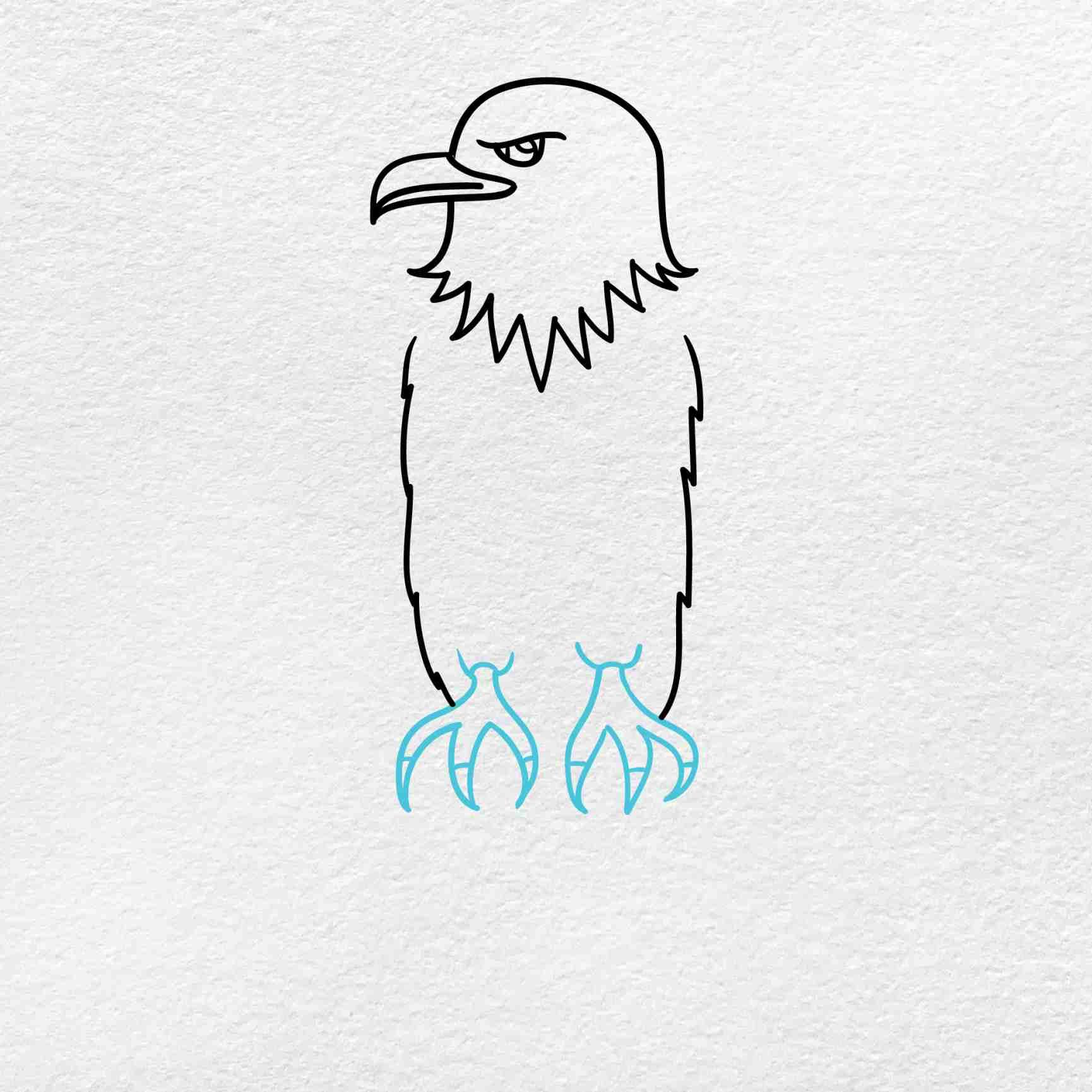 Bald Eagle Drawing: Step 4