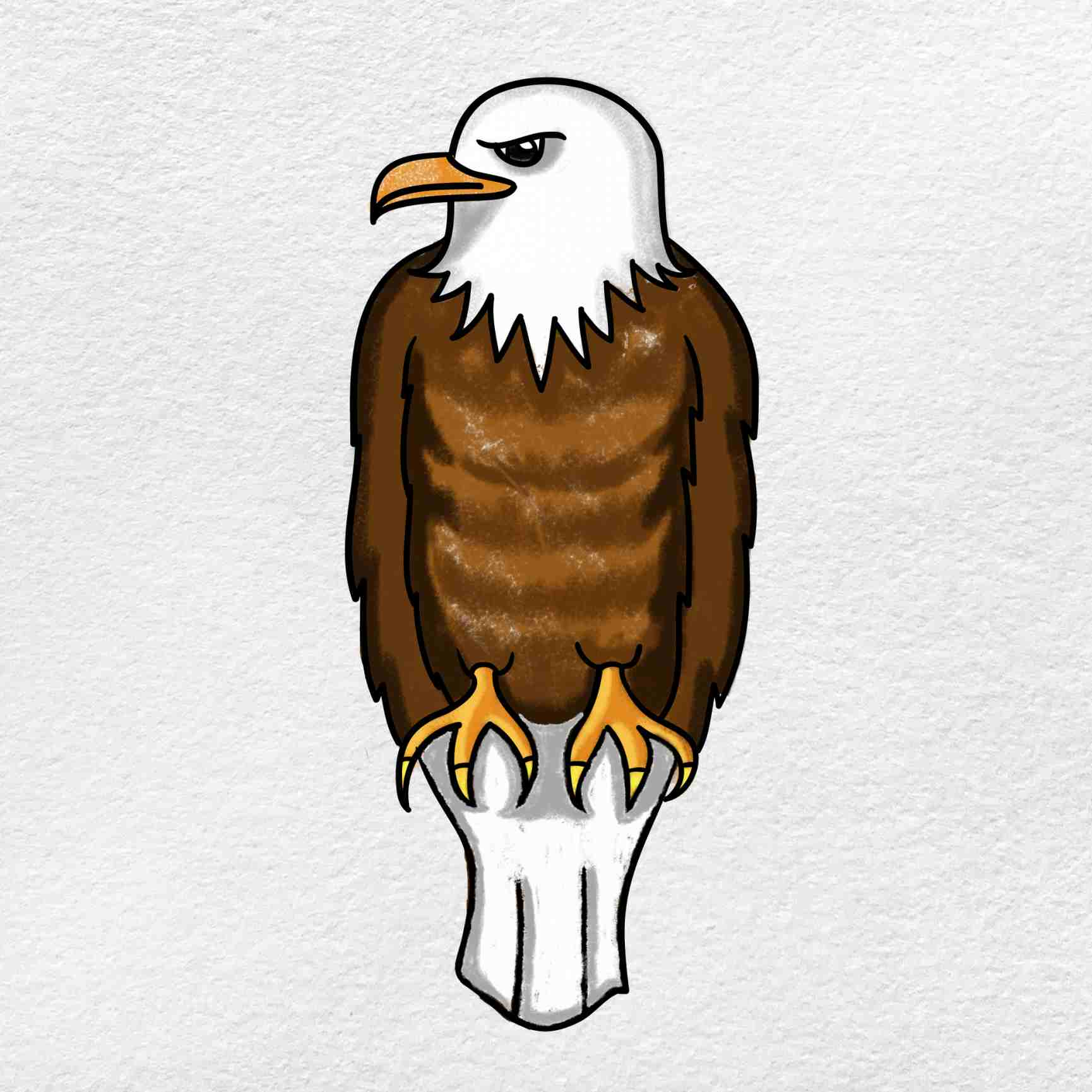 Bald Eagle Drawing: Step 6