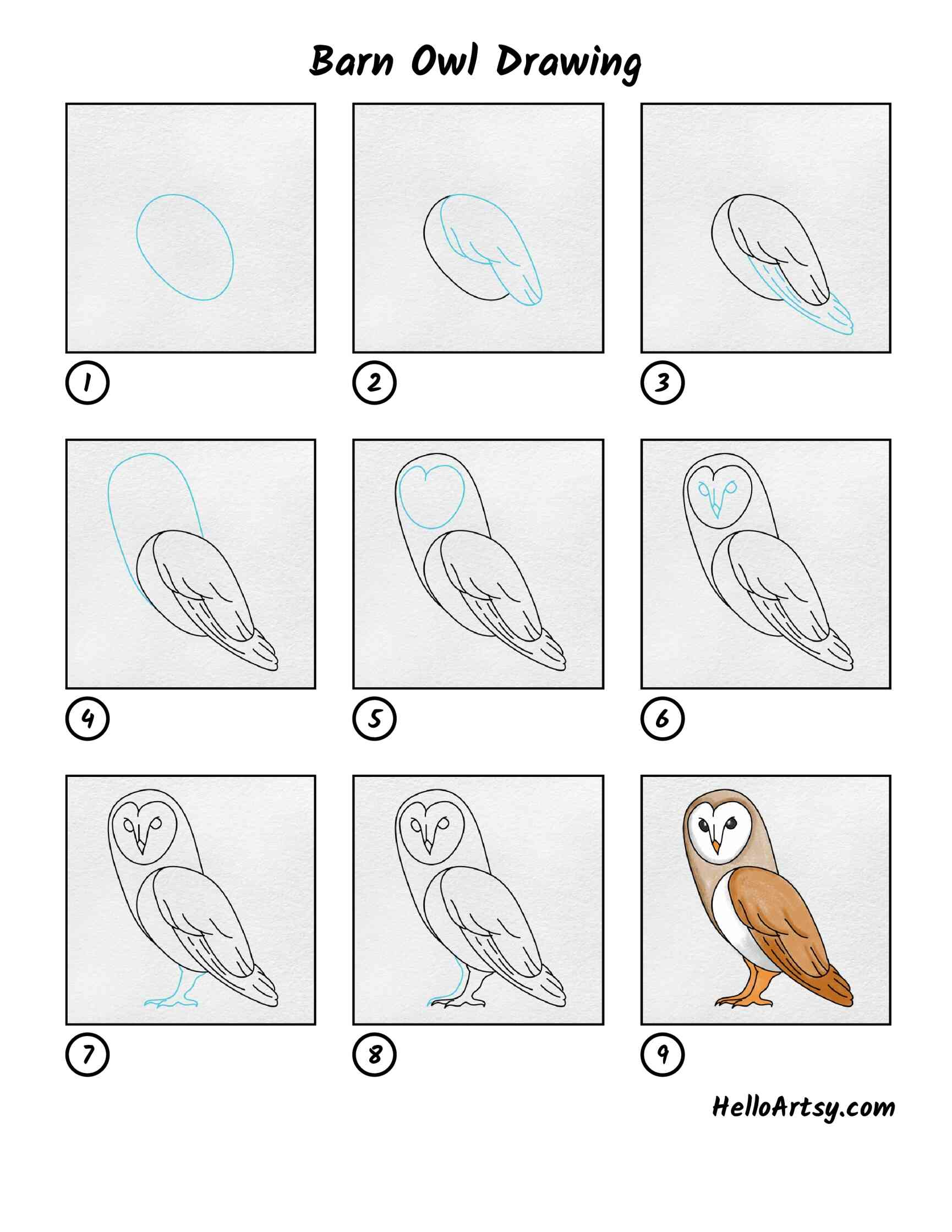 Barn Owl Drawing: All Steps
