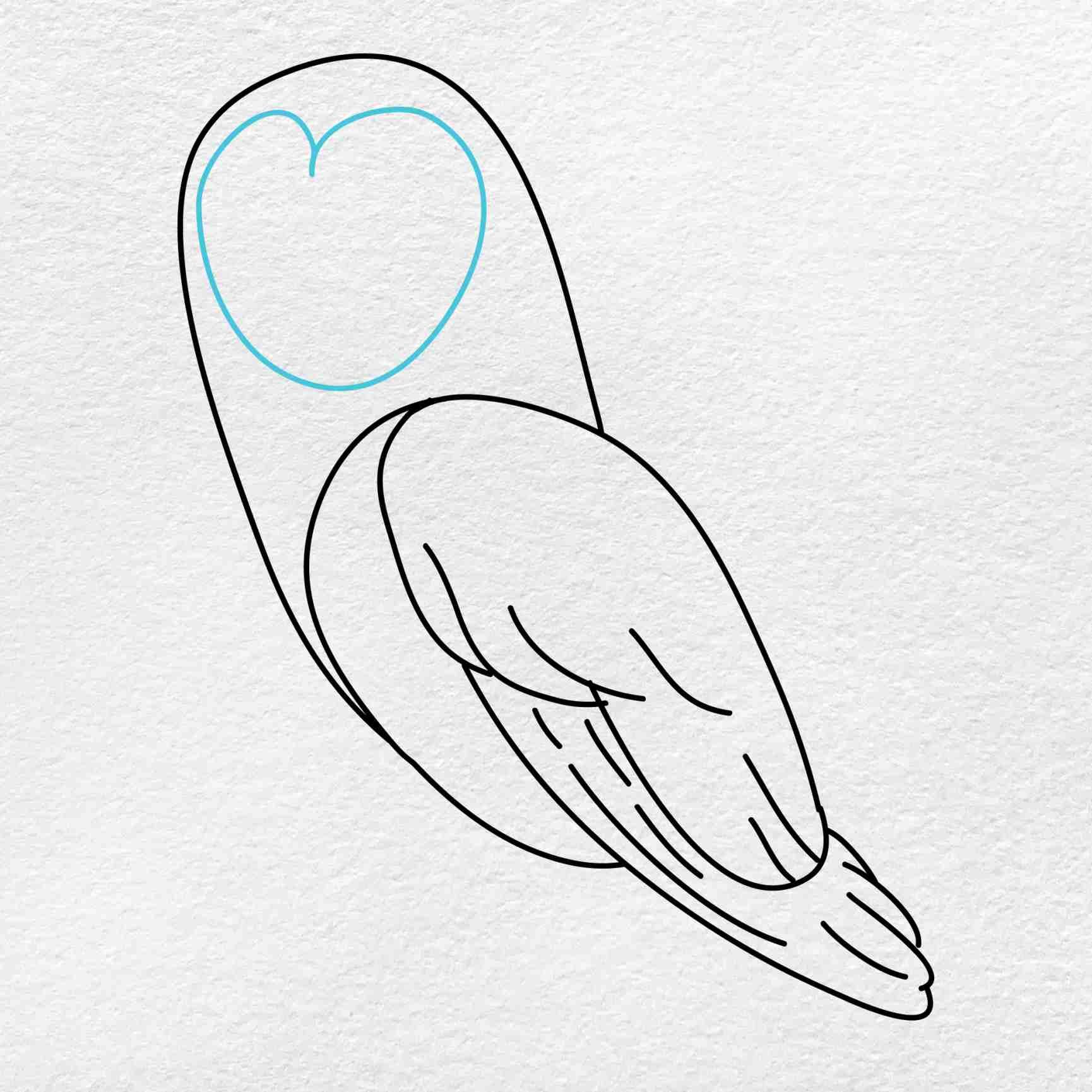 Barn Owl Drawing: Step 5