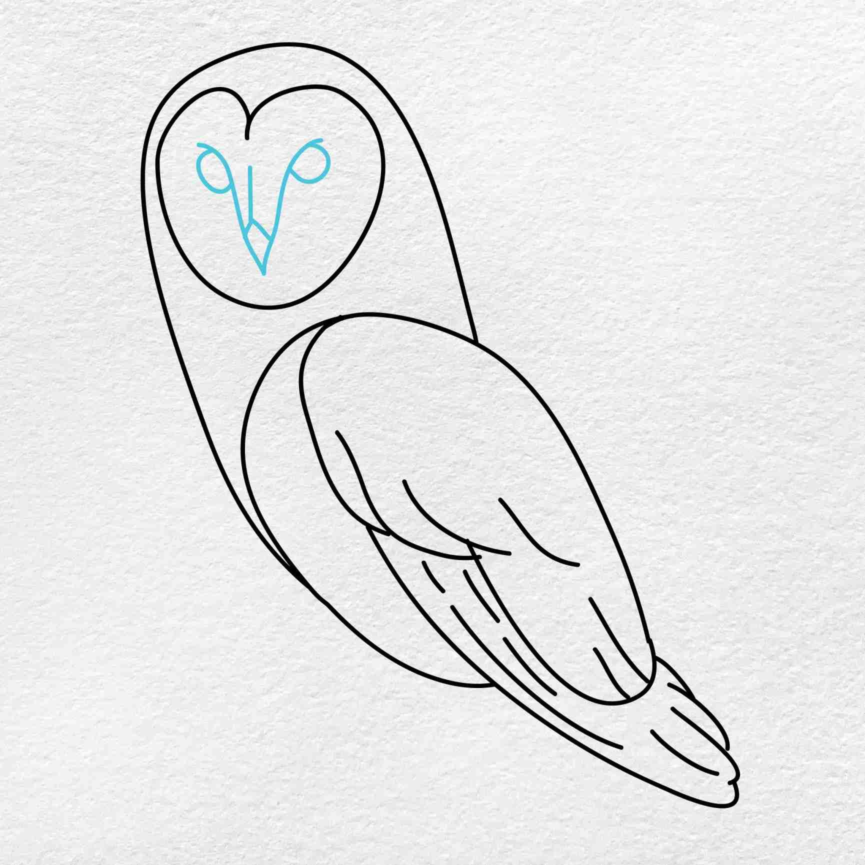 Barn Owl Drawing: Step 6