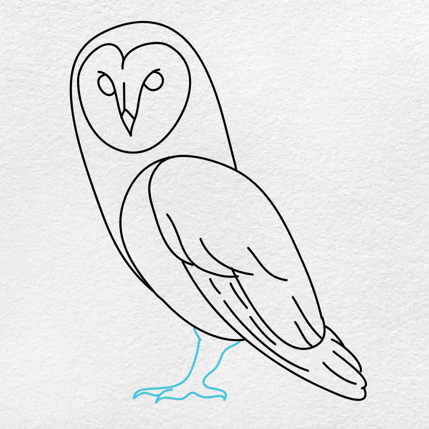 Barn Owl Drawing: Step 7