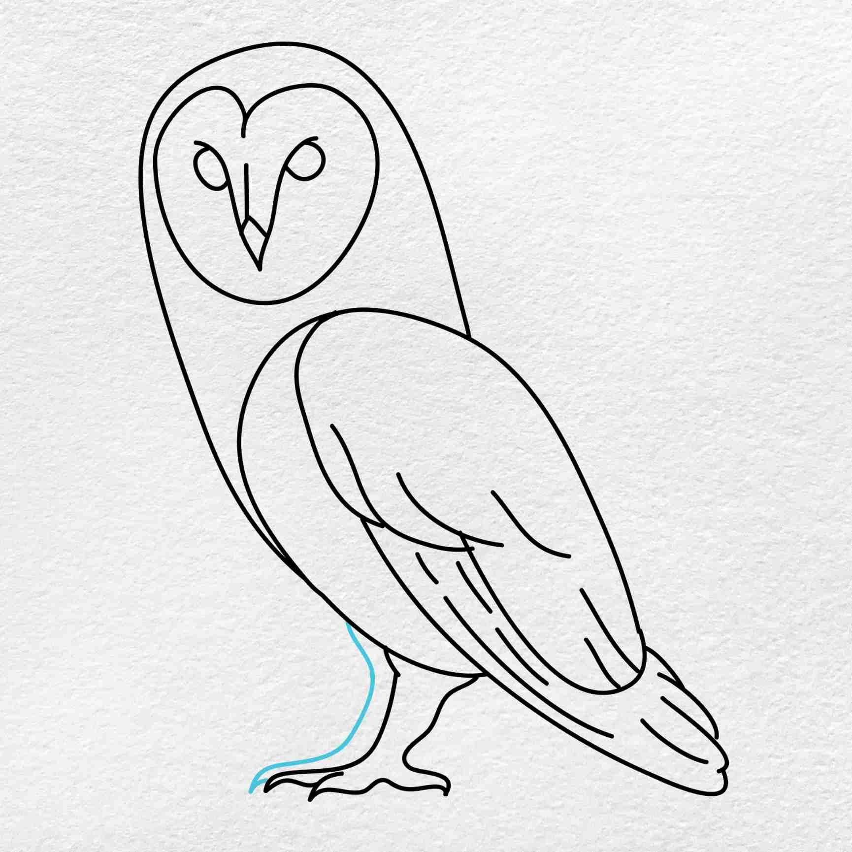 Barn Owl Drawing: Step 8