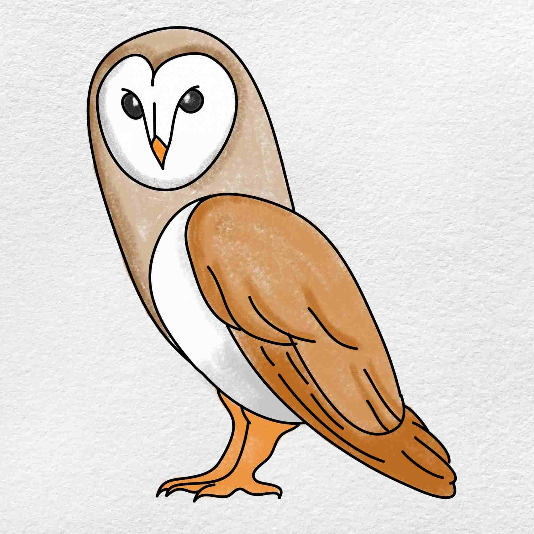 Barn Owl Drawing: Step 9
