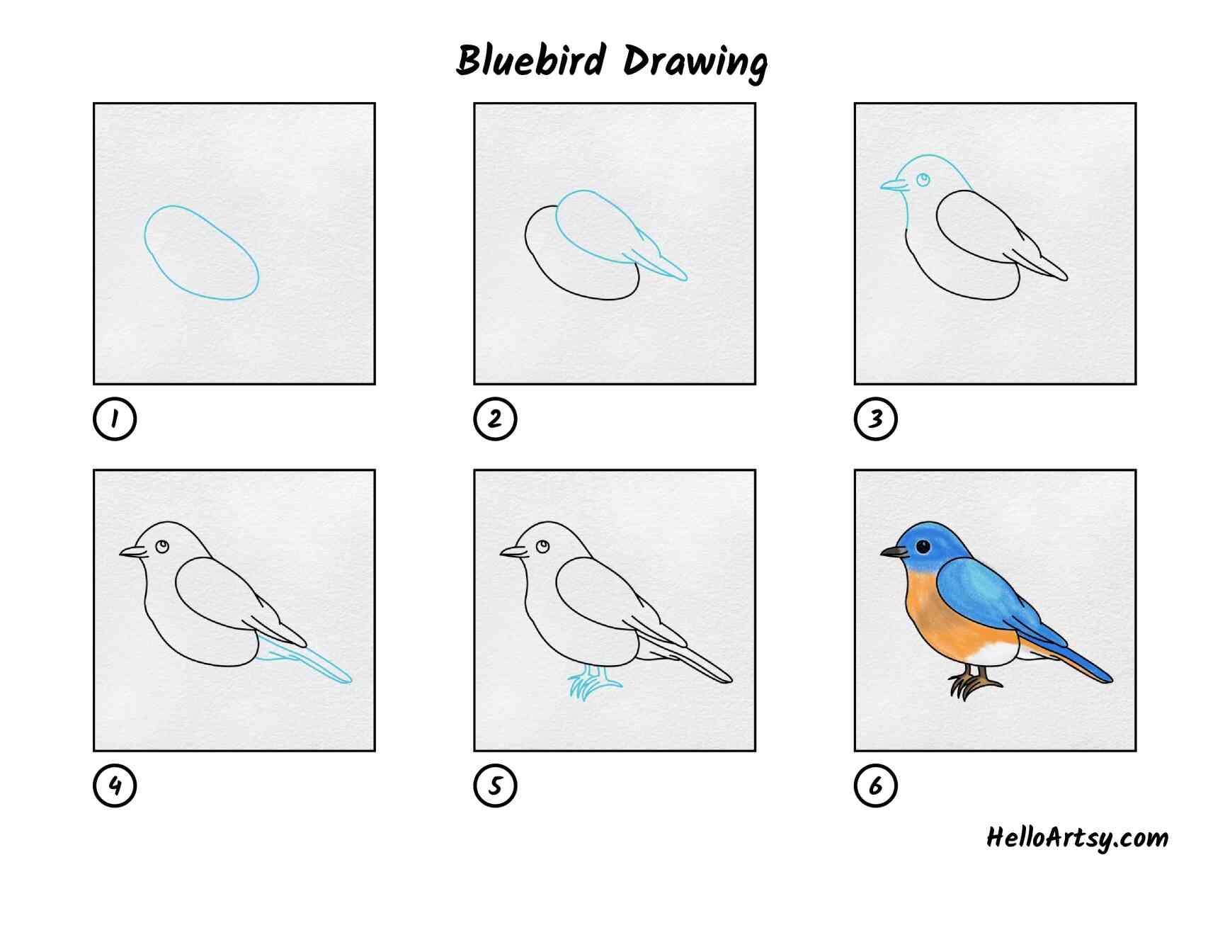Bluebird Drawing: All Steps