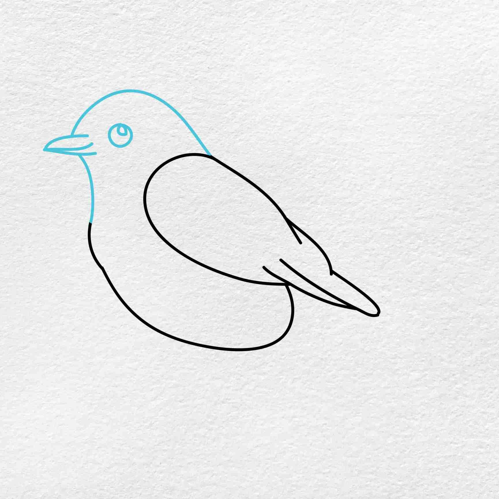Bluebird Drawing: Step 3