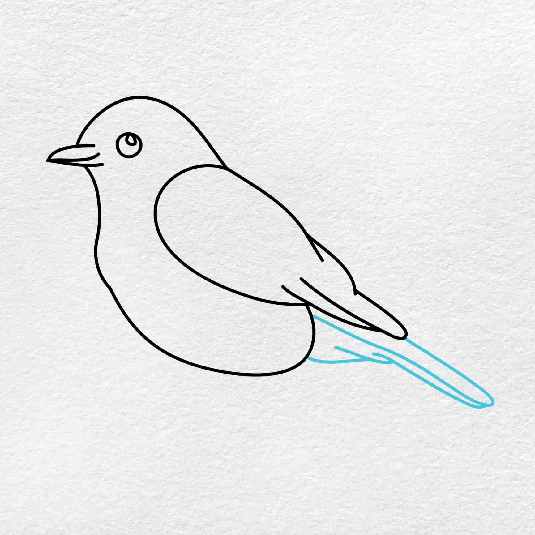 Bluebird Drawing: Step 4