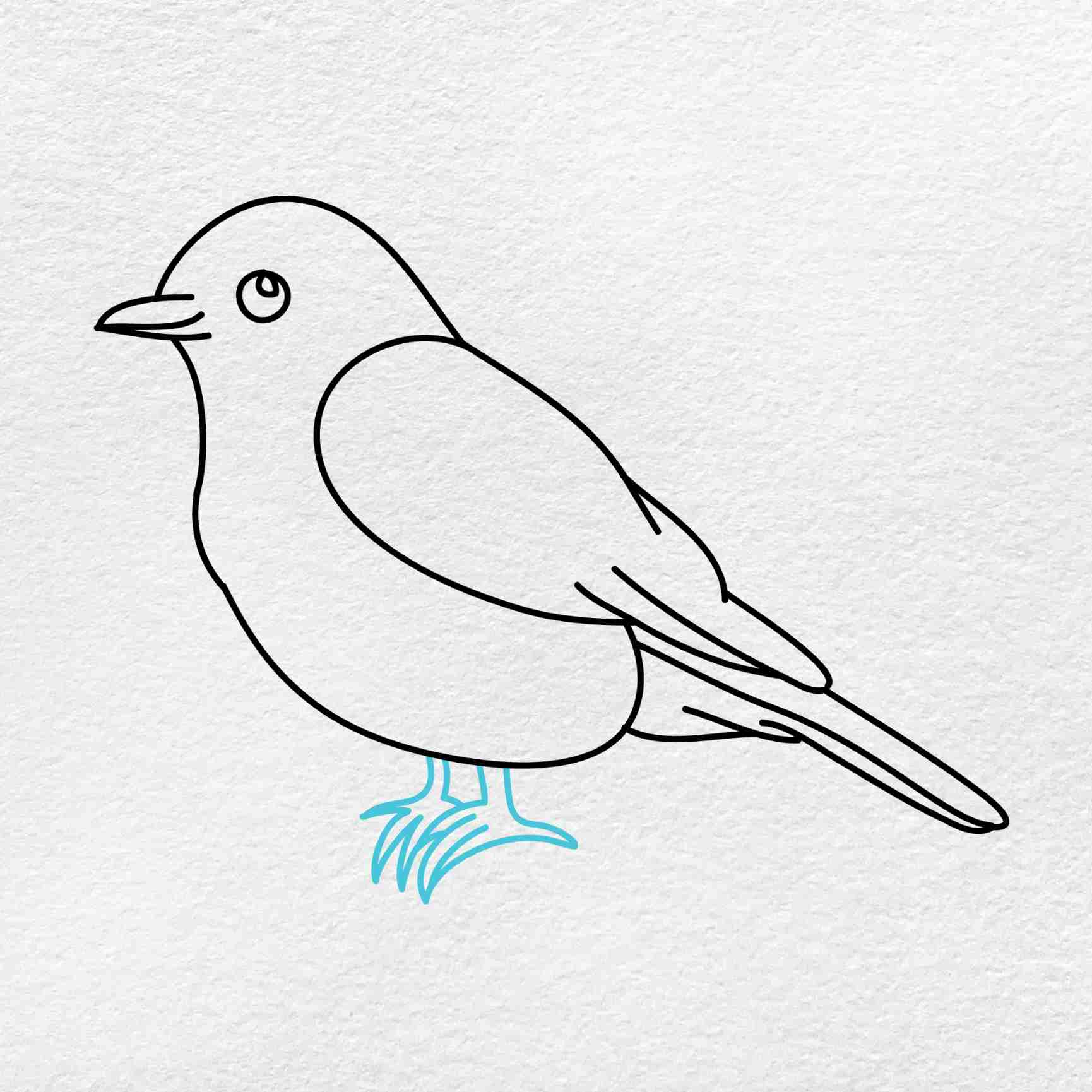 Bluebird Drawing: Step 5