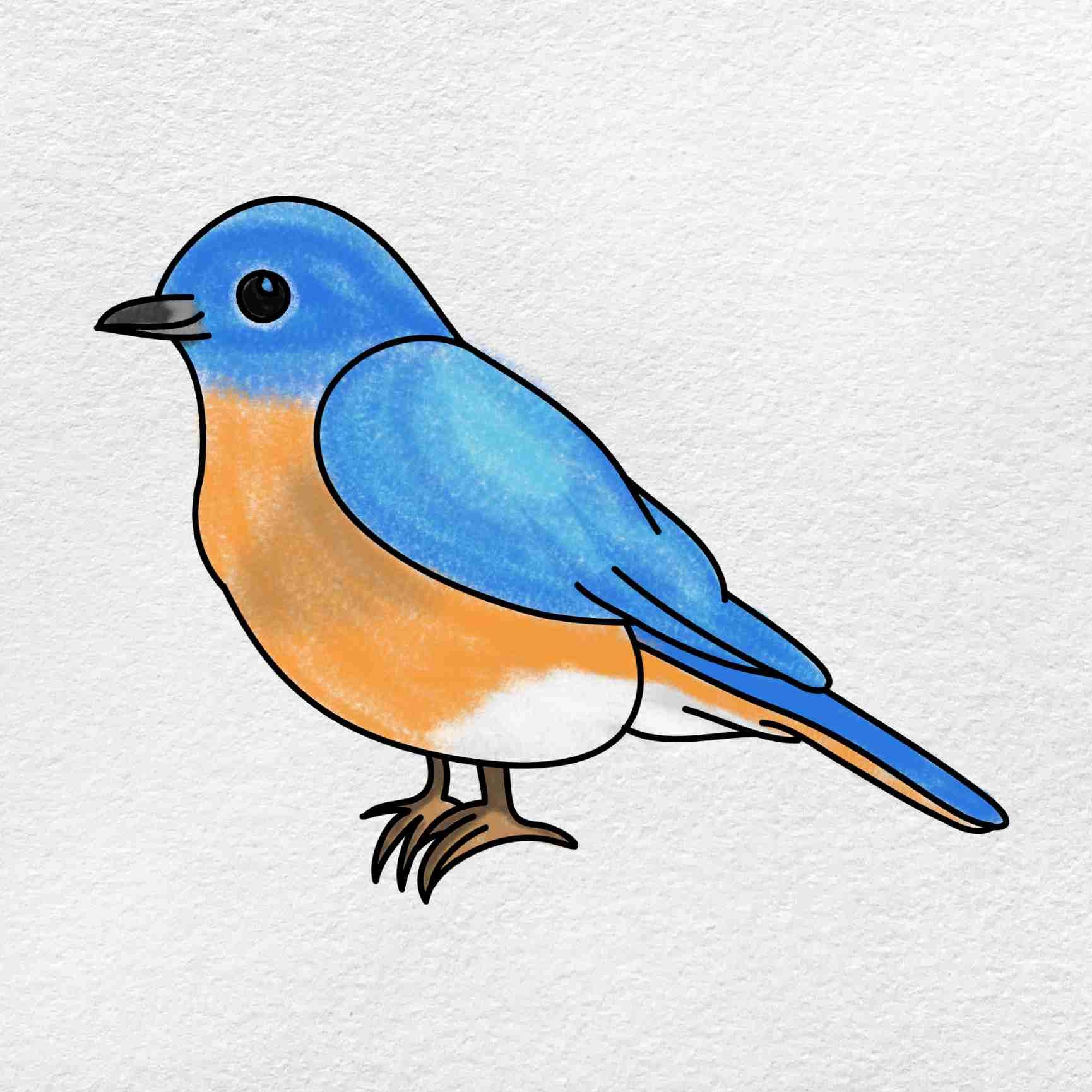 Bluebird Drawing: Step 6