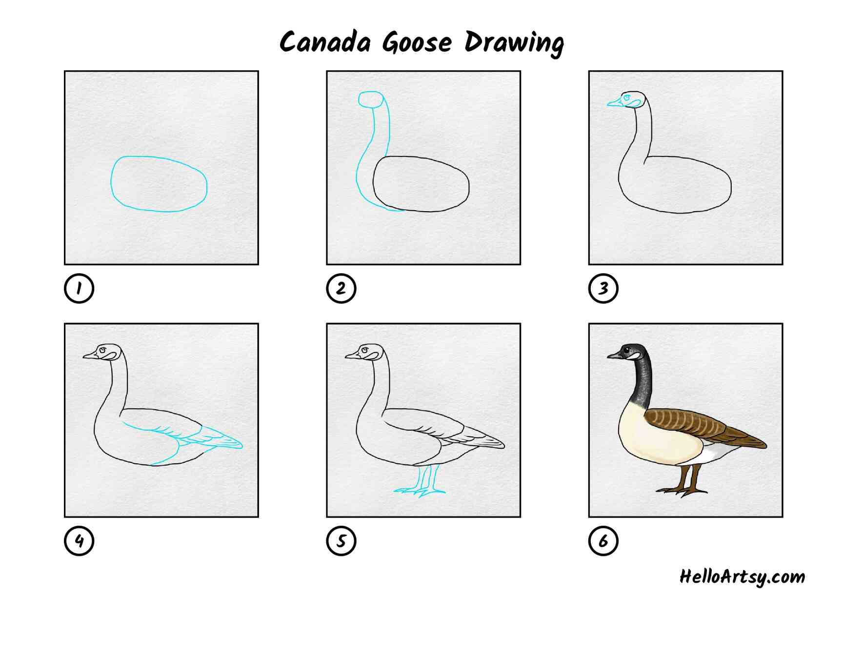 Canada Goose Drawing: All Steps