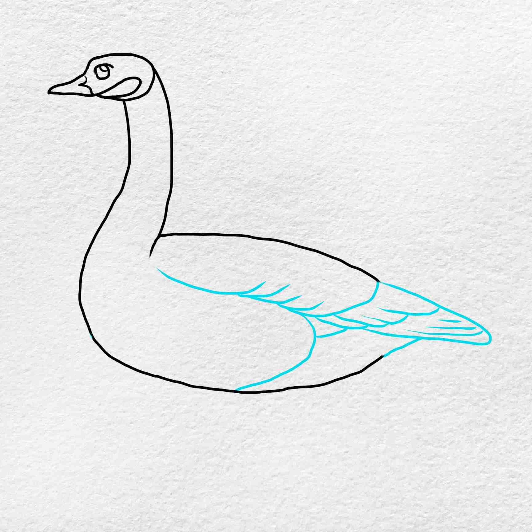 Canada Goose Drawing: Step 4