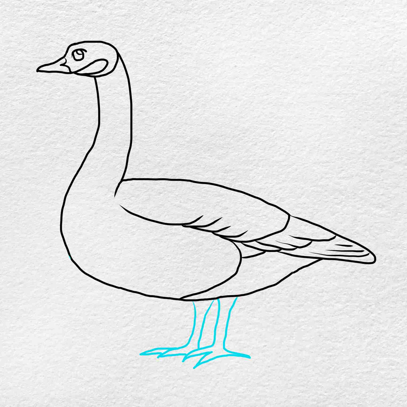 Canada Goose Drawing: Step 5