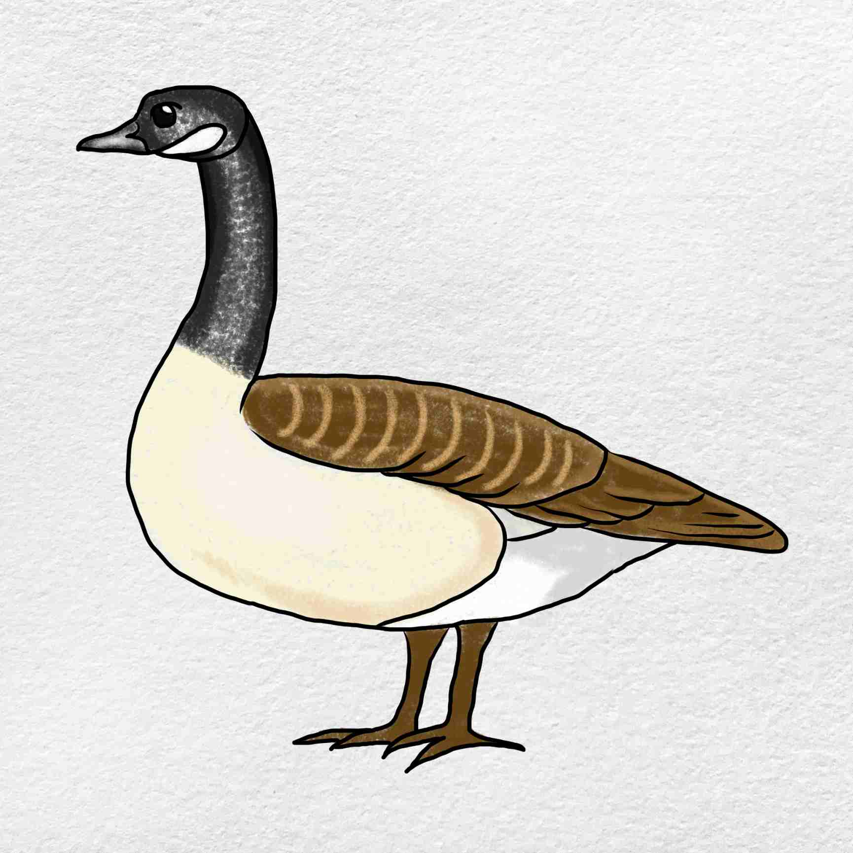 Canada Goose Drawing: Step 6