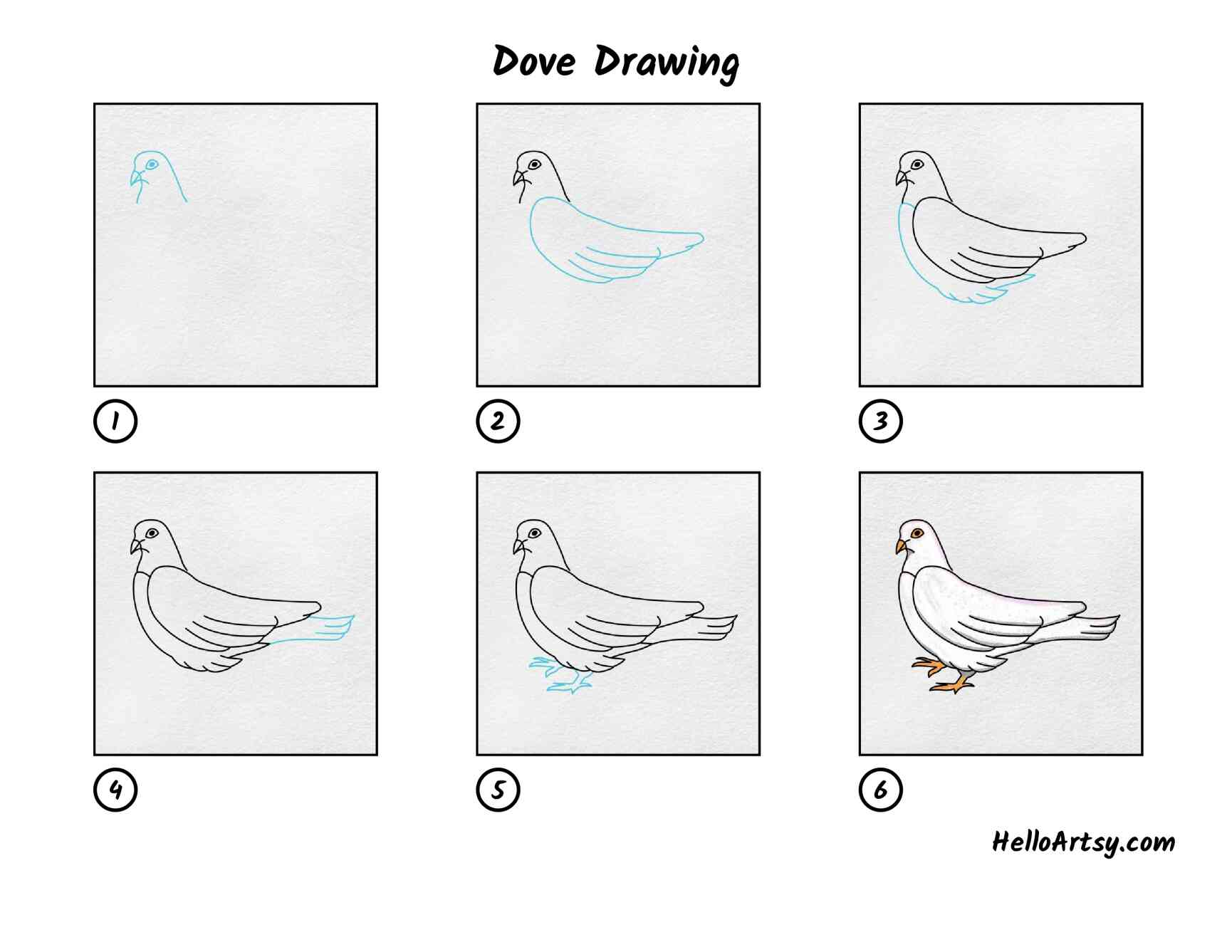 Dove Drawing: All Steps