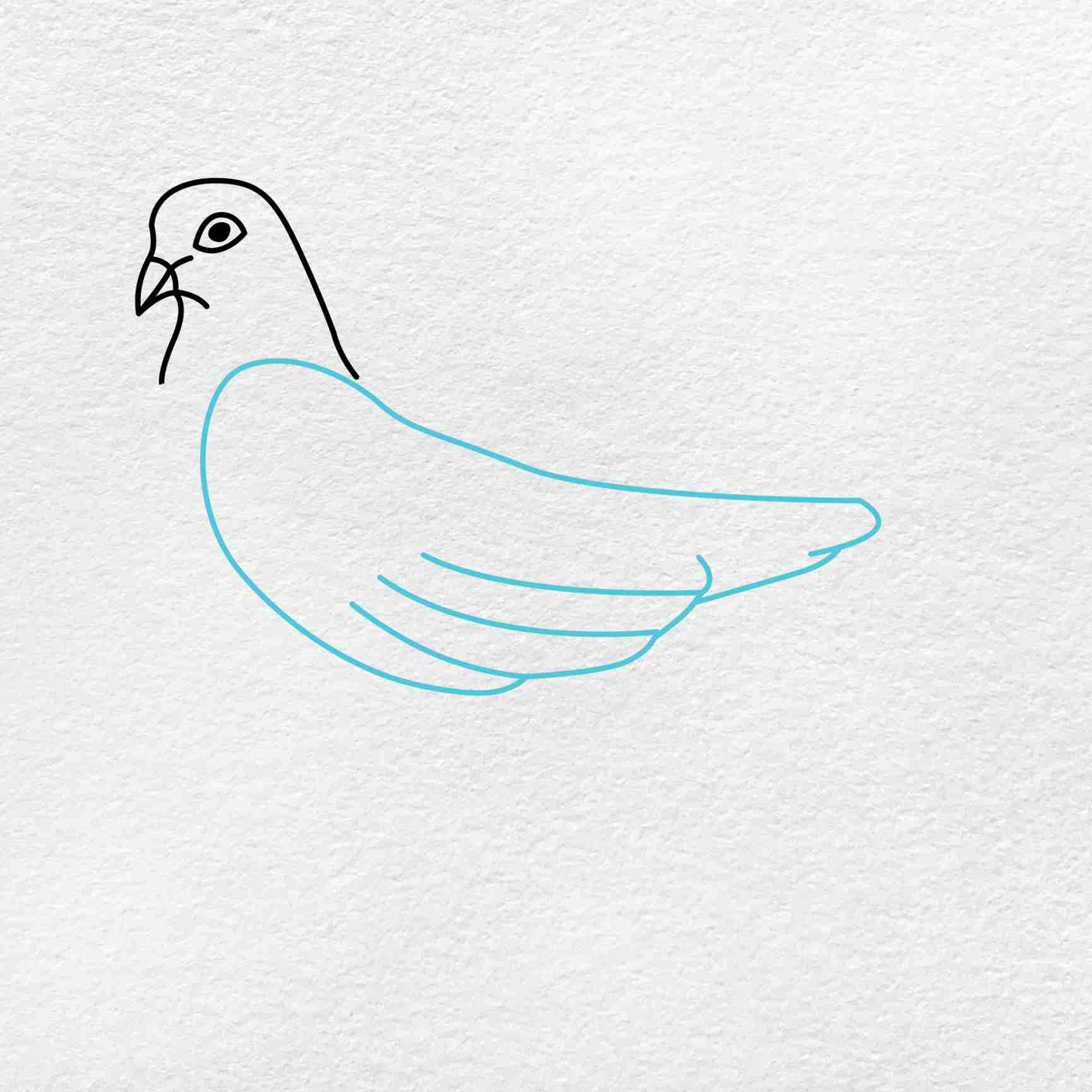 Dove Drawing: Step 2