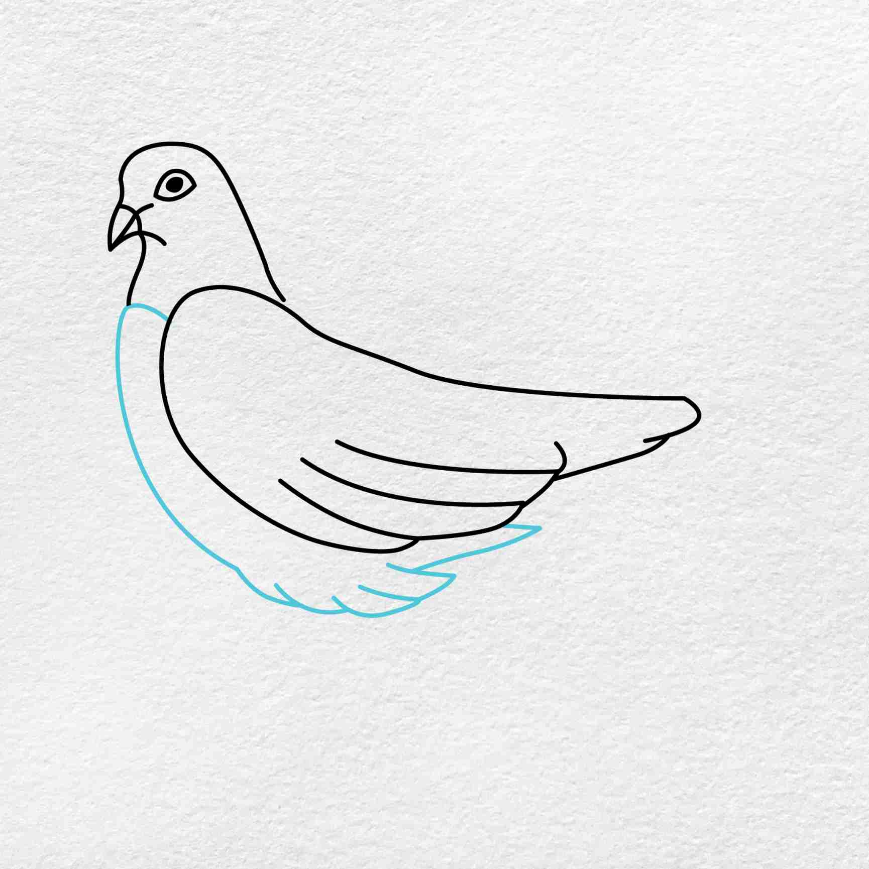 Dove Drawing: Step 3