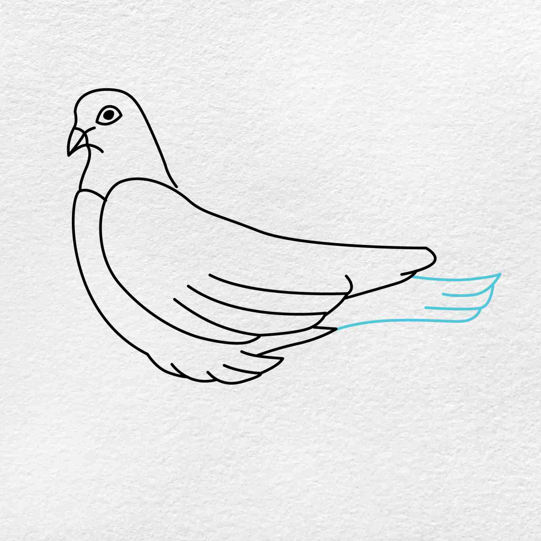 Dove Drawing: Step 4
