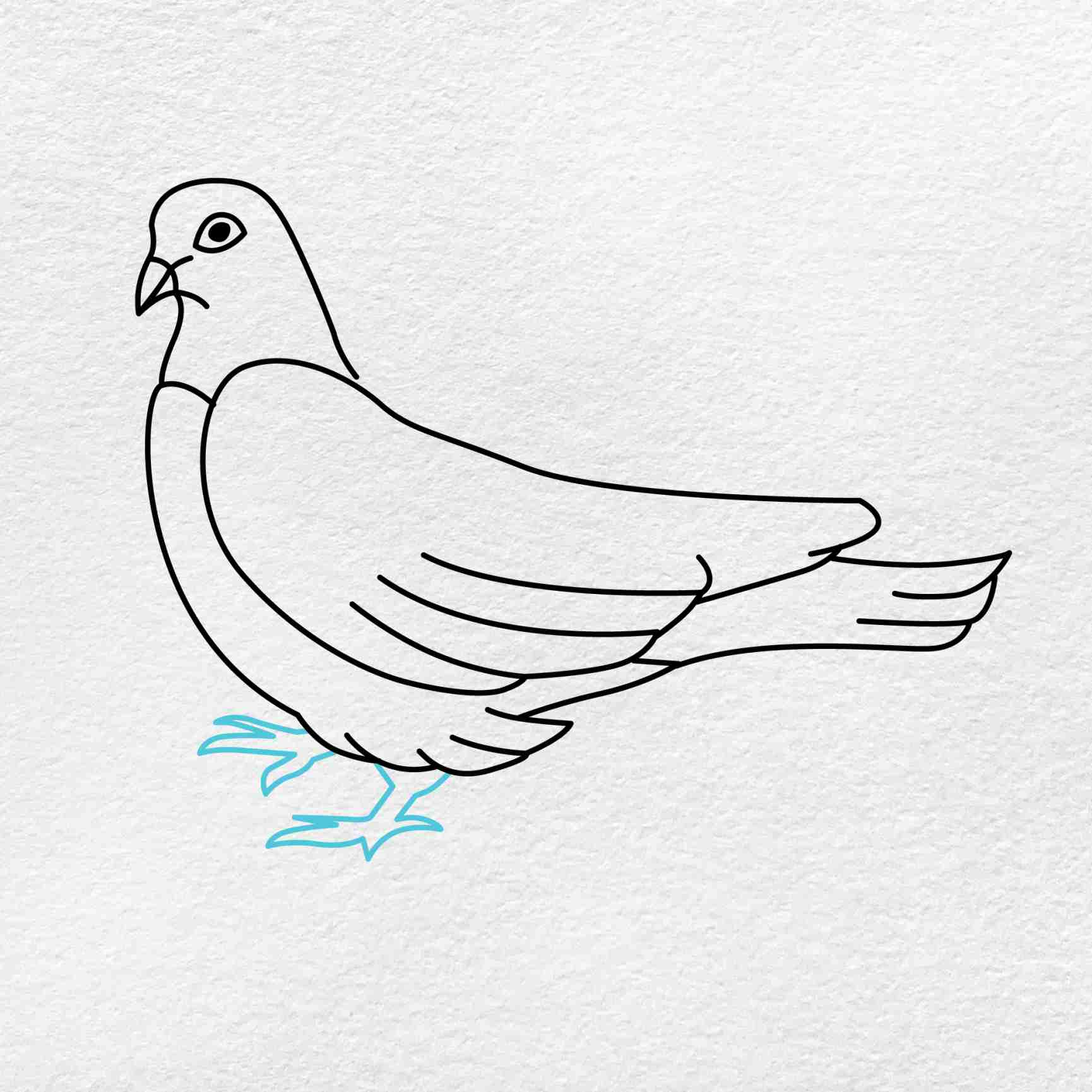 Dove Drawing: Step 5