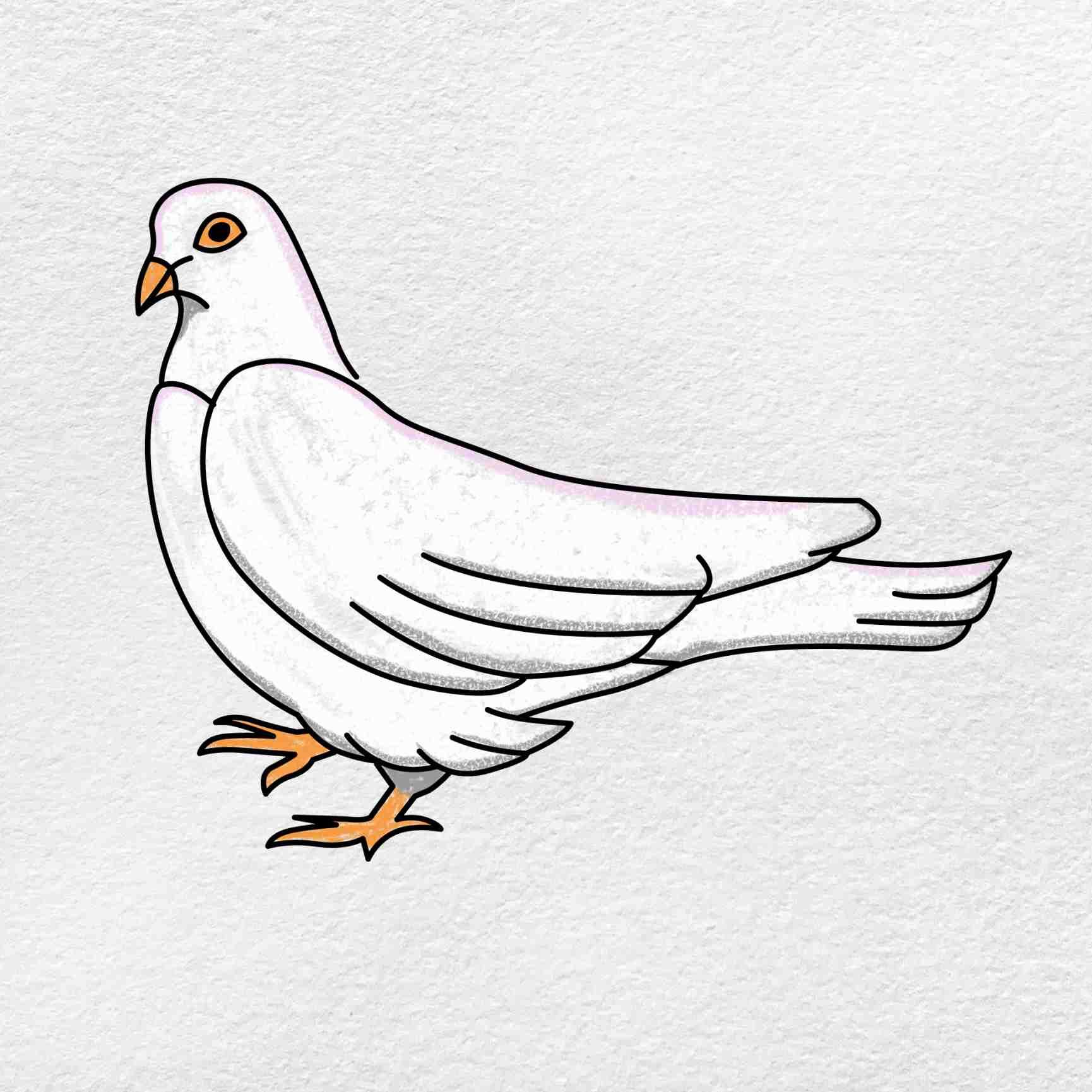 Dove Drawing: Step 6