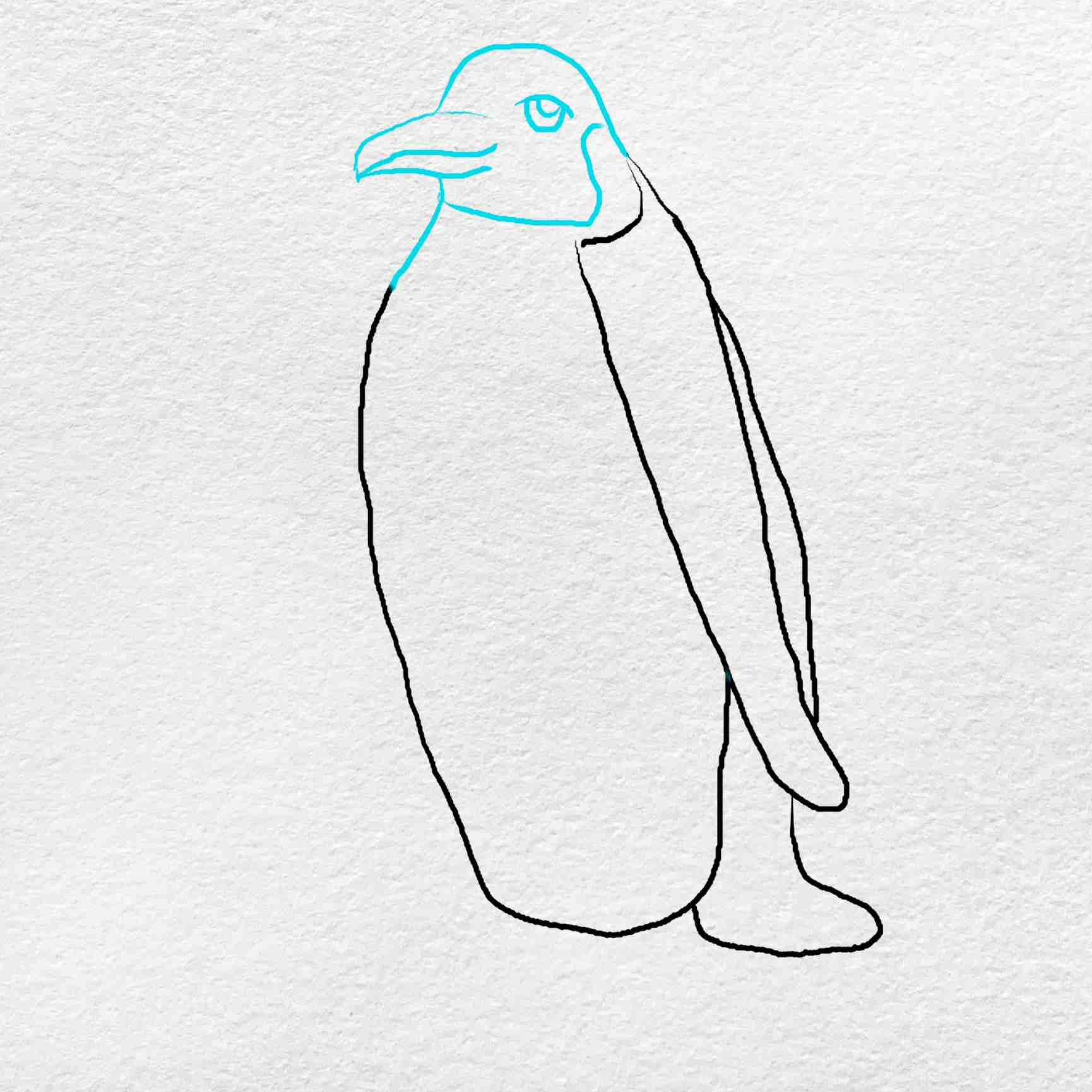 Emperor Penguin Drawing: Step 4