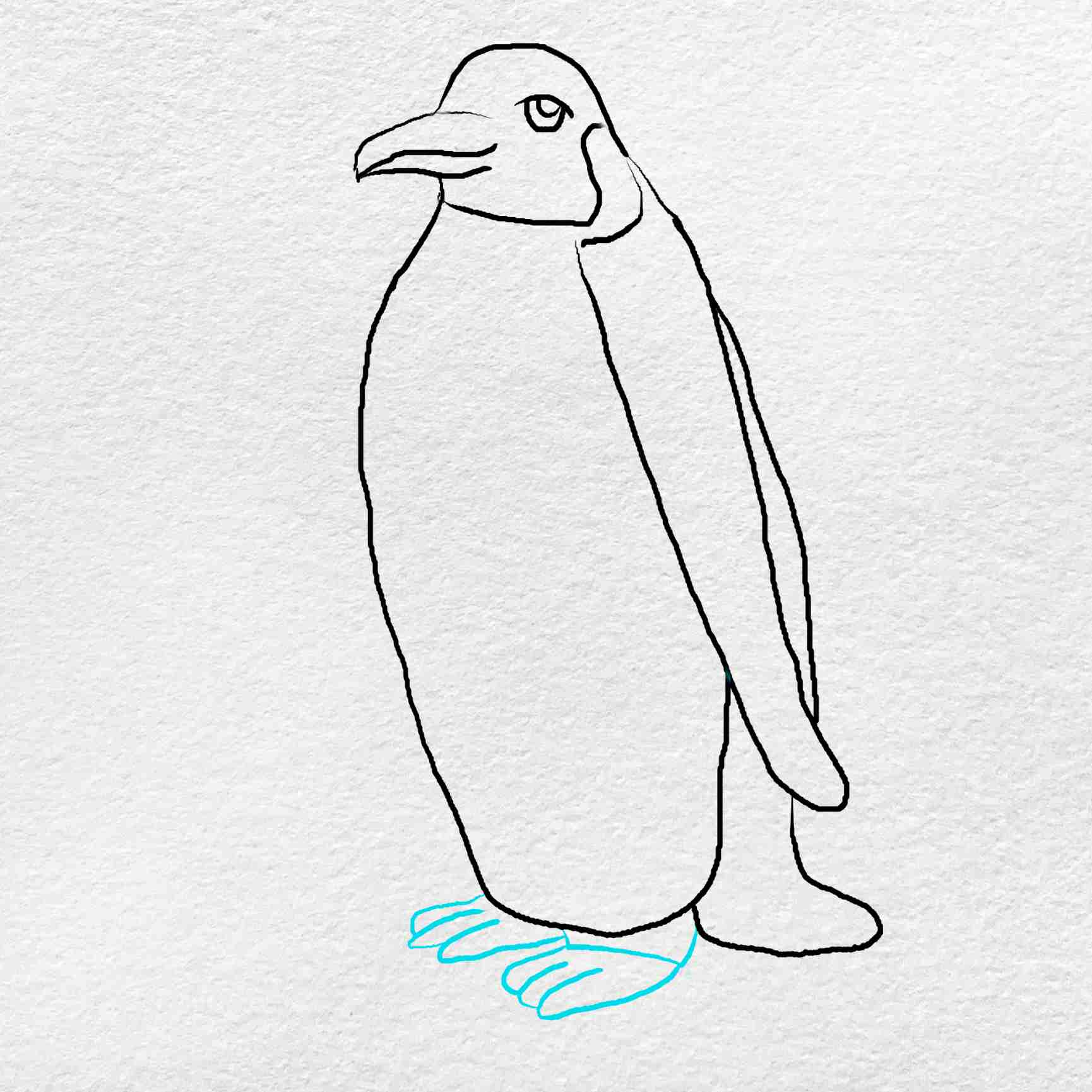 Emperor Penguin Drawing: Step 5