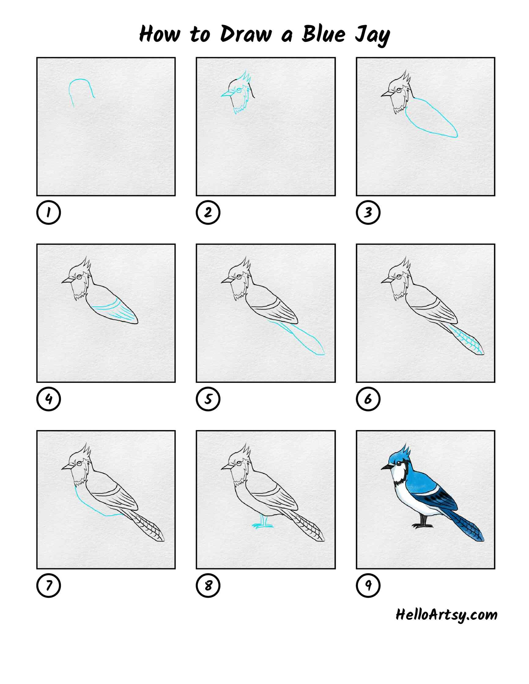 How To Draw A Blue Jay: All Steps