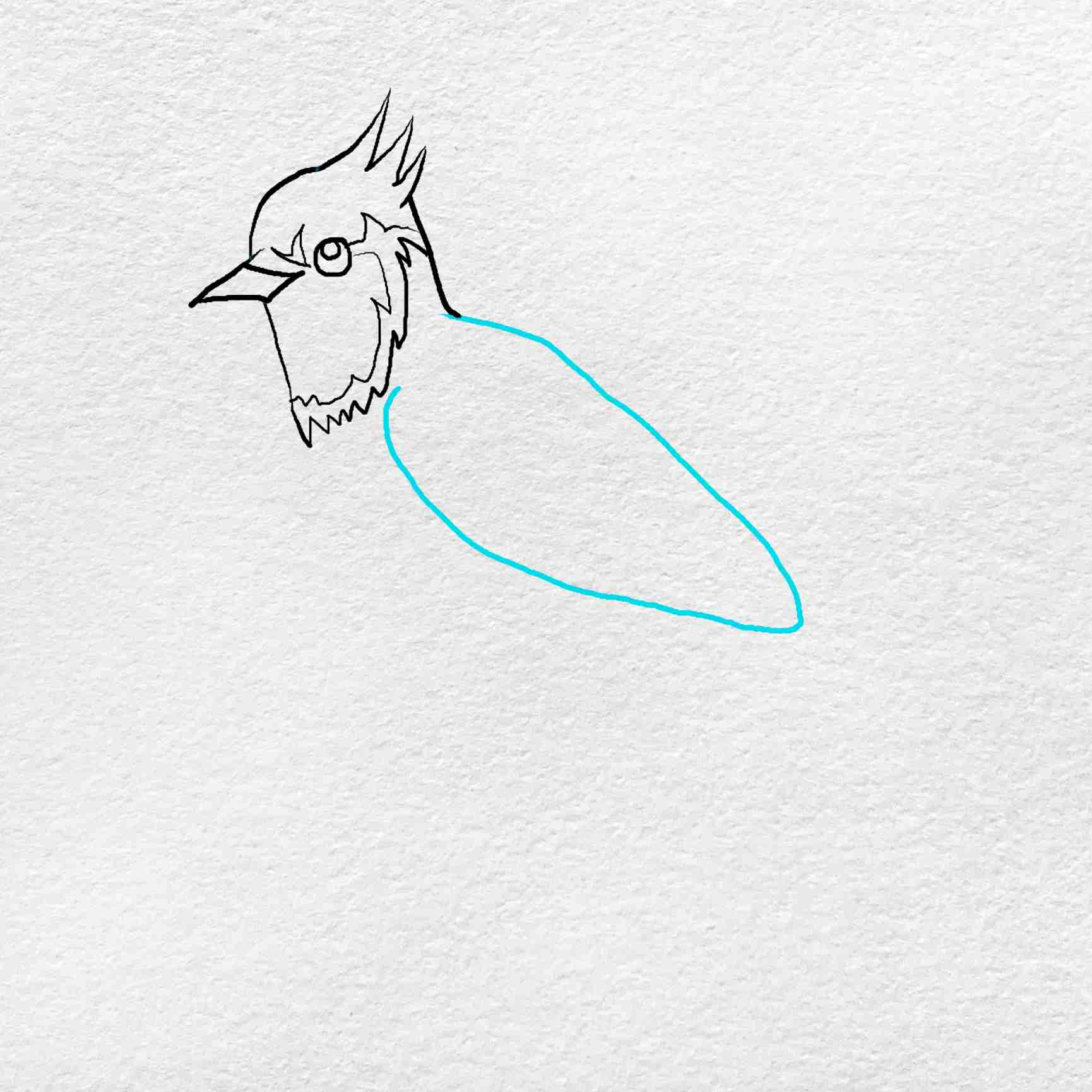 How To Draw A Blue Jay: Step 3