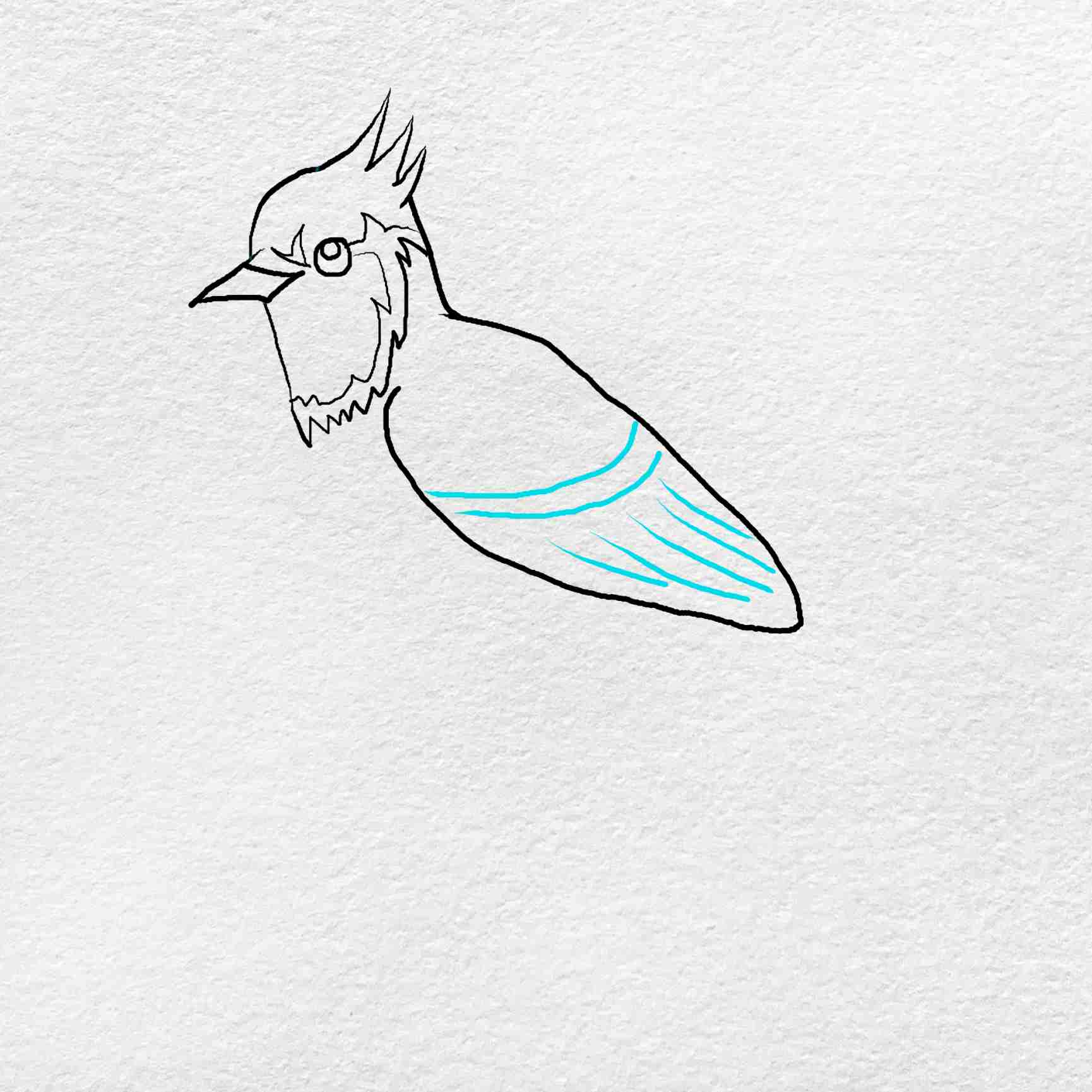 How To Draw A Blue Jay: Step 4