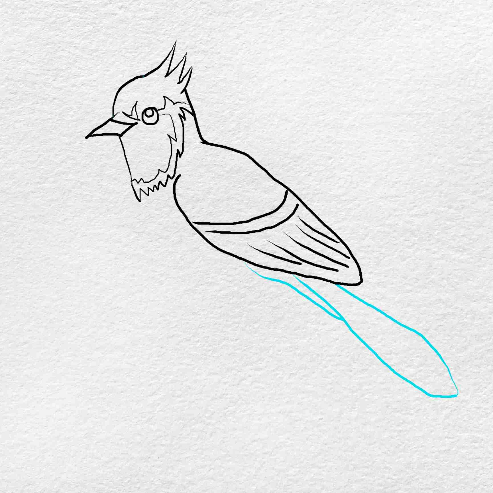 How To Draw A Blue Jay: Step 5