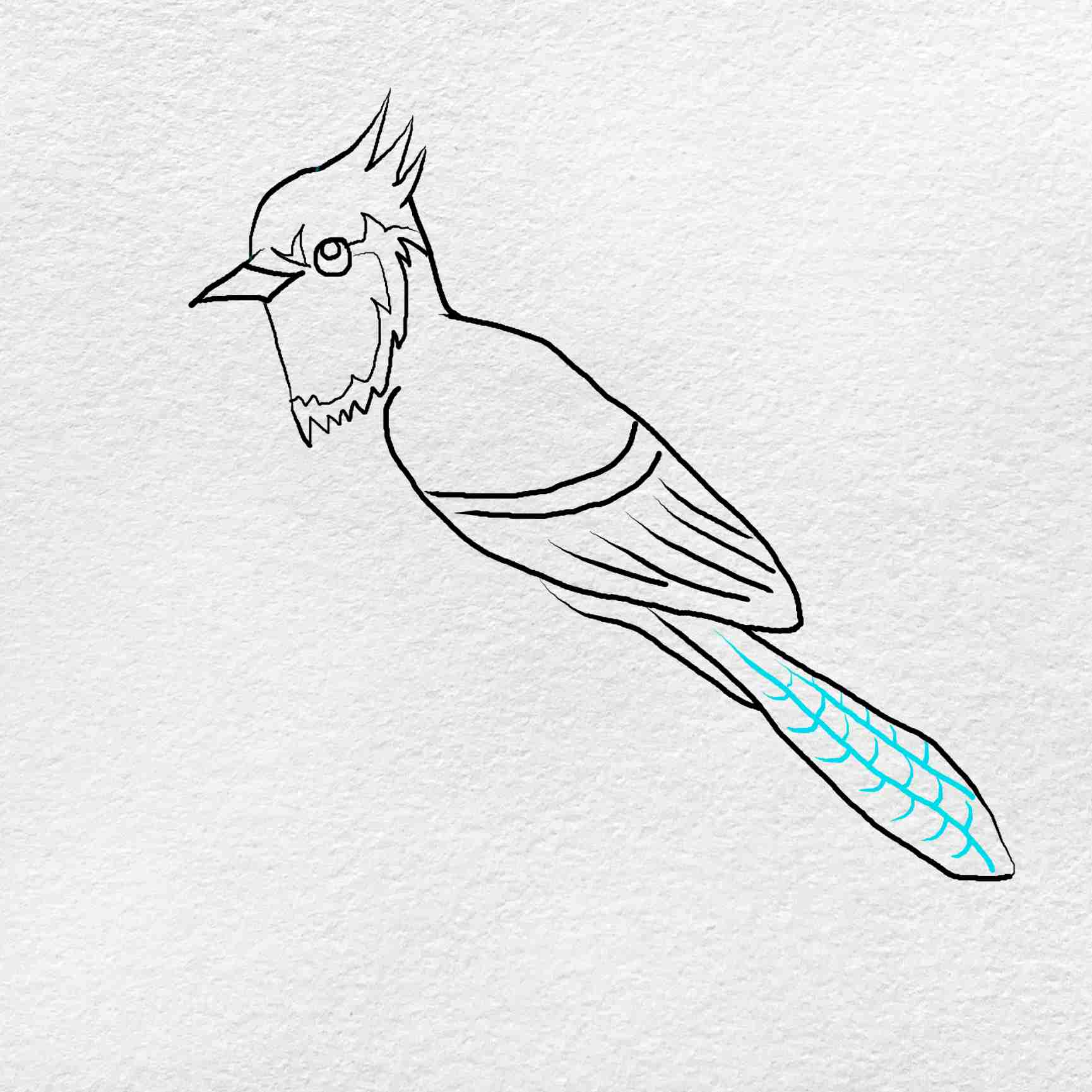 How To Draw A Blue Jay: Step 6