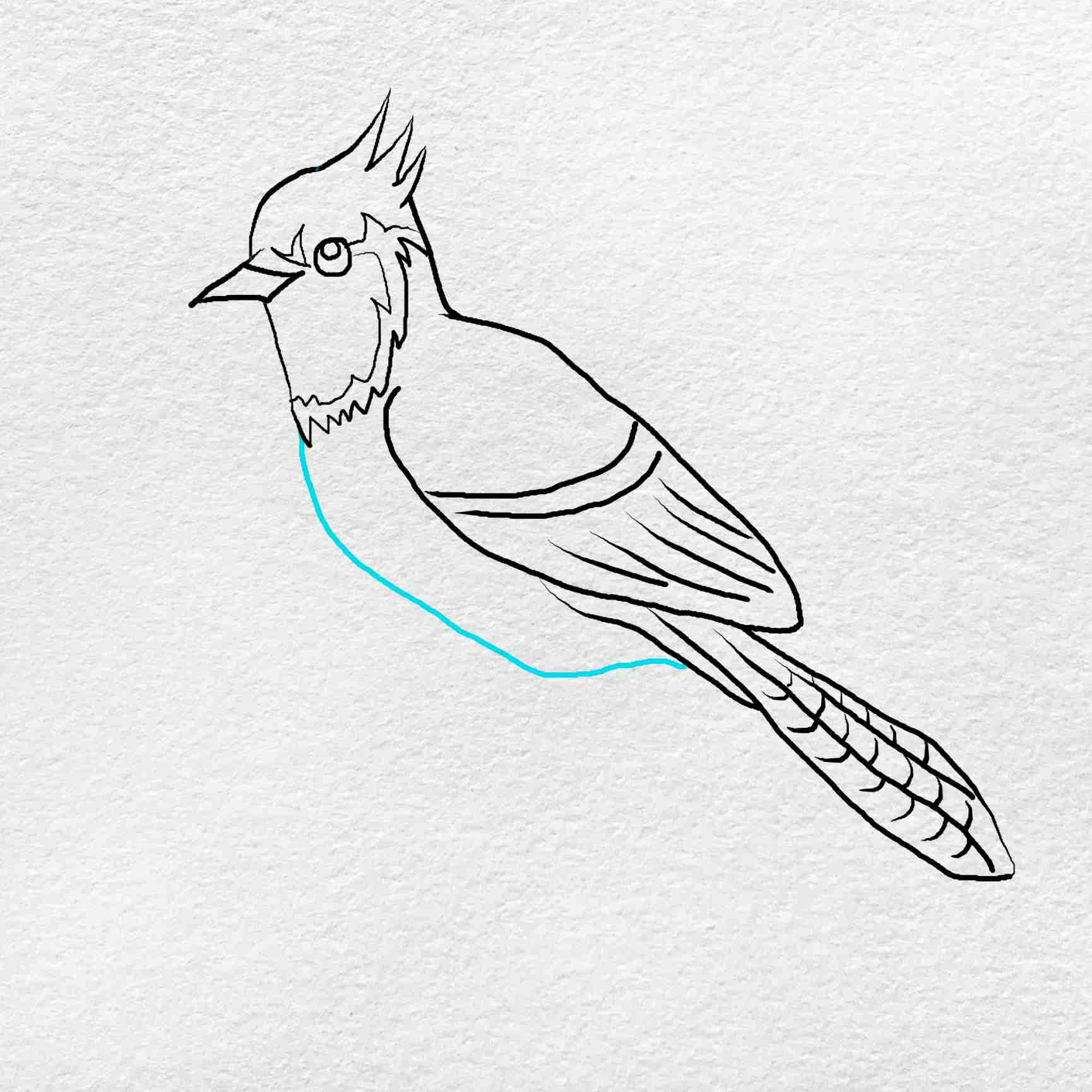 How To Draw A Blue Jay: Step 7