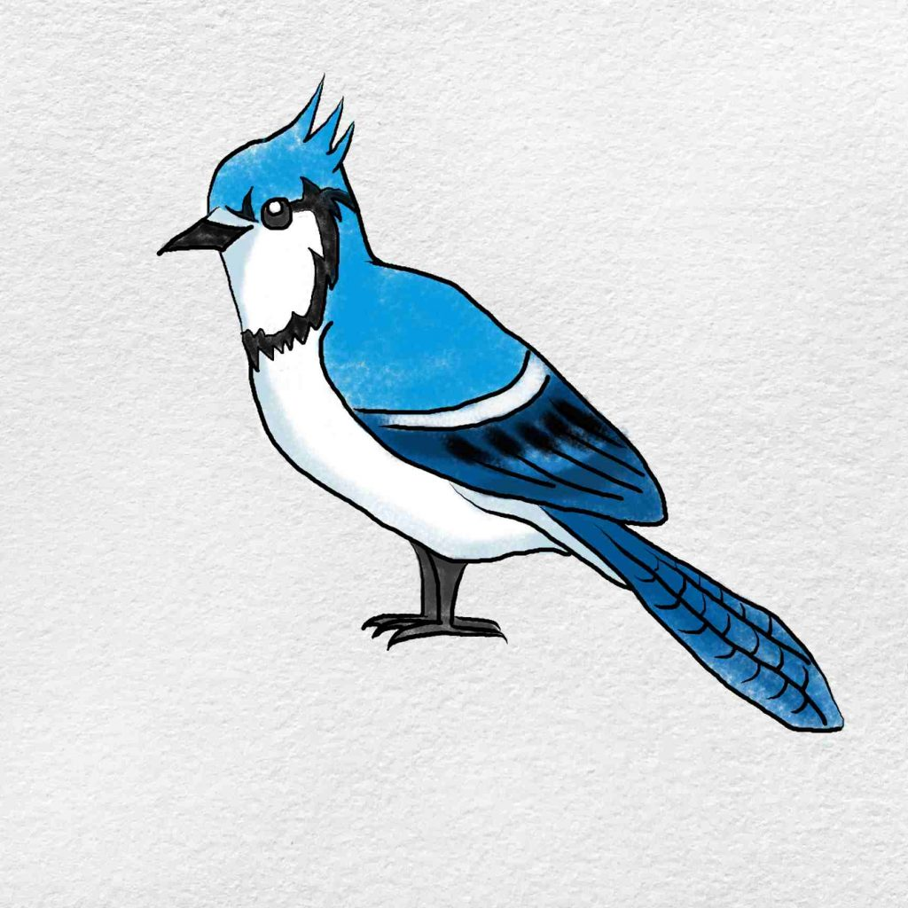 How To Draw A Blue Jay: Step 9
