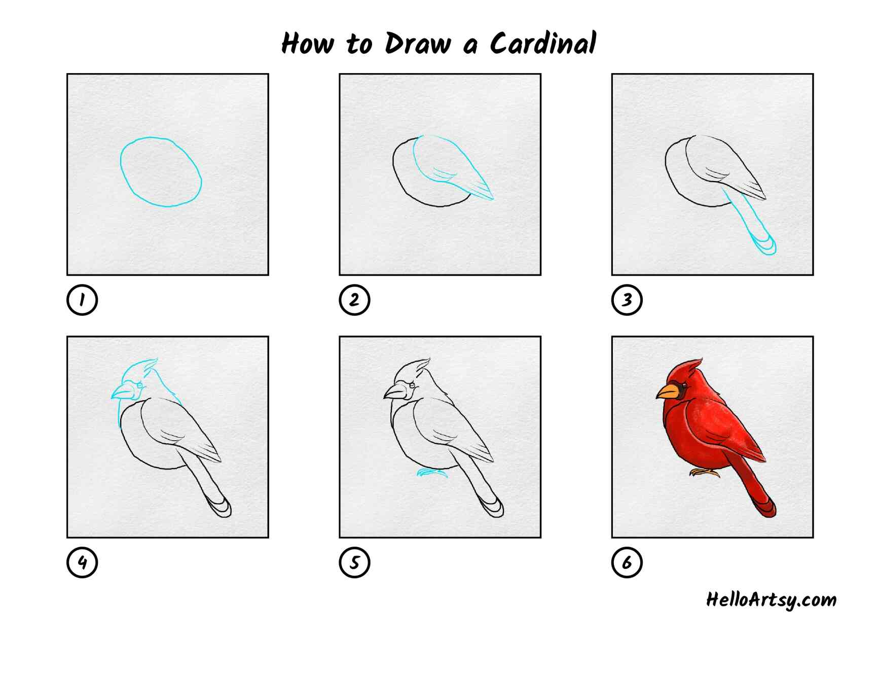 How To Draw A Cardinal: All Steps