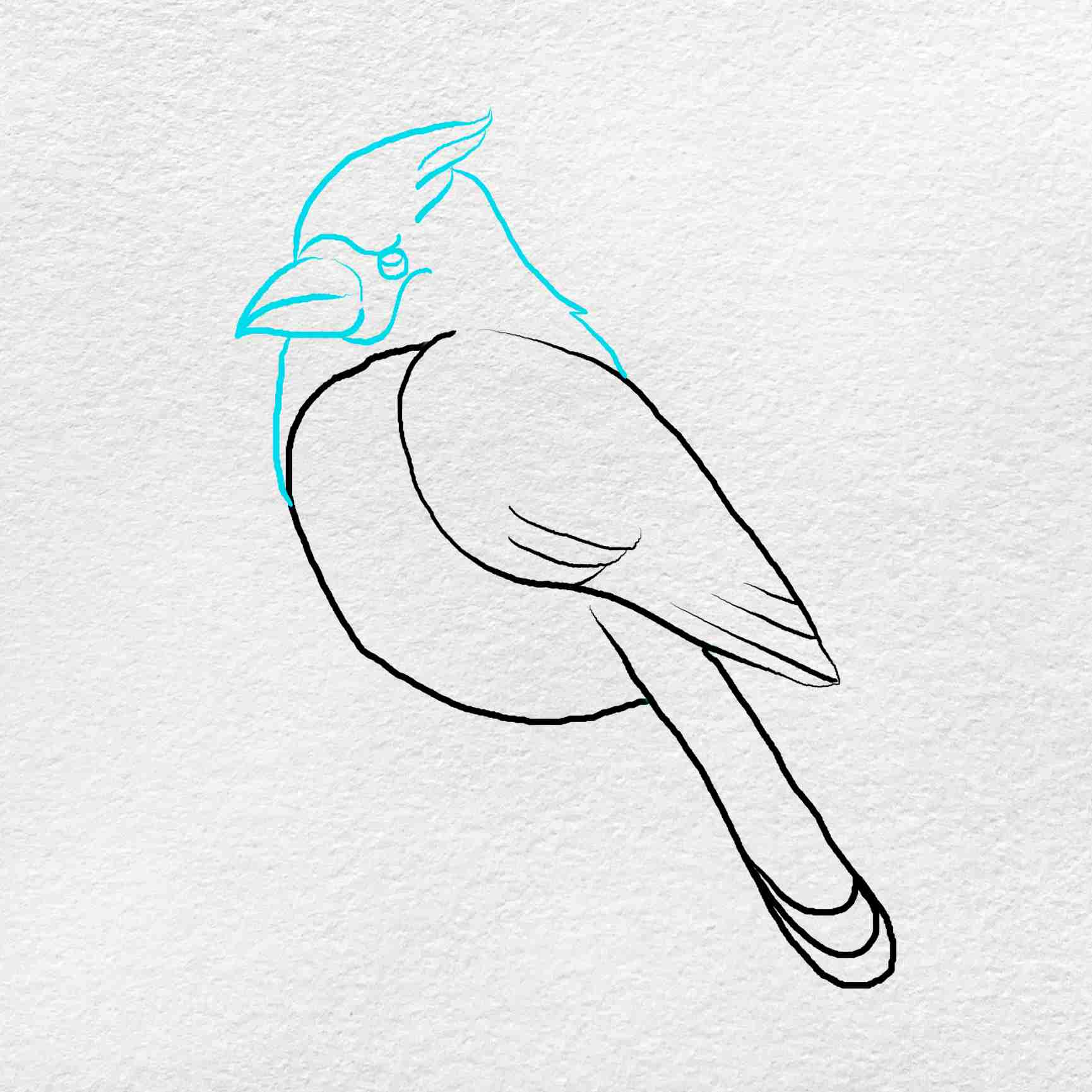 How To Draw A Cardinal: Step 4