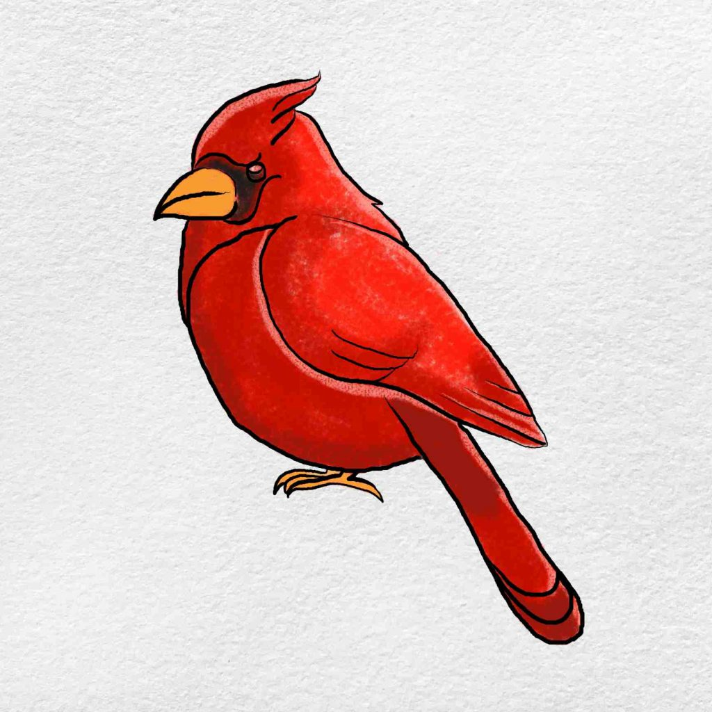 How To Draw A Cardinal: Step 6