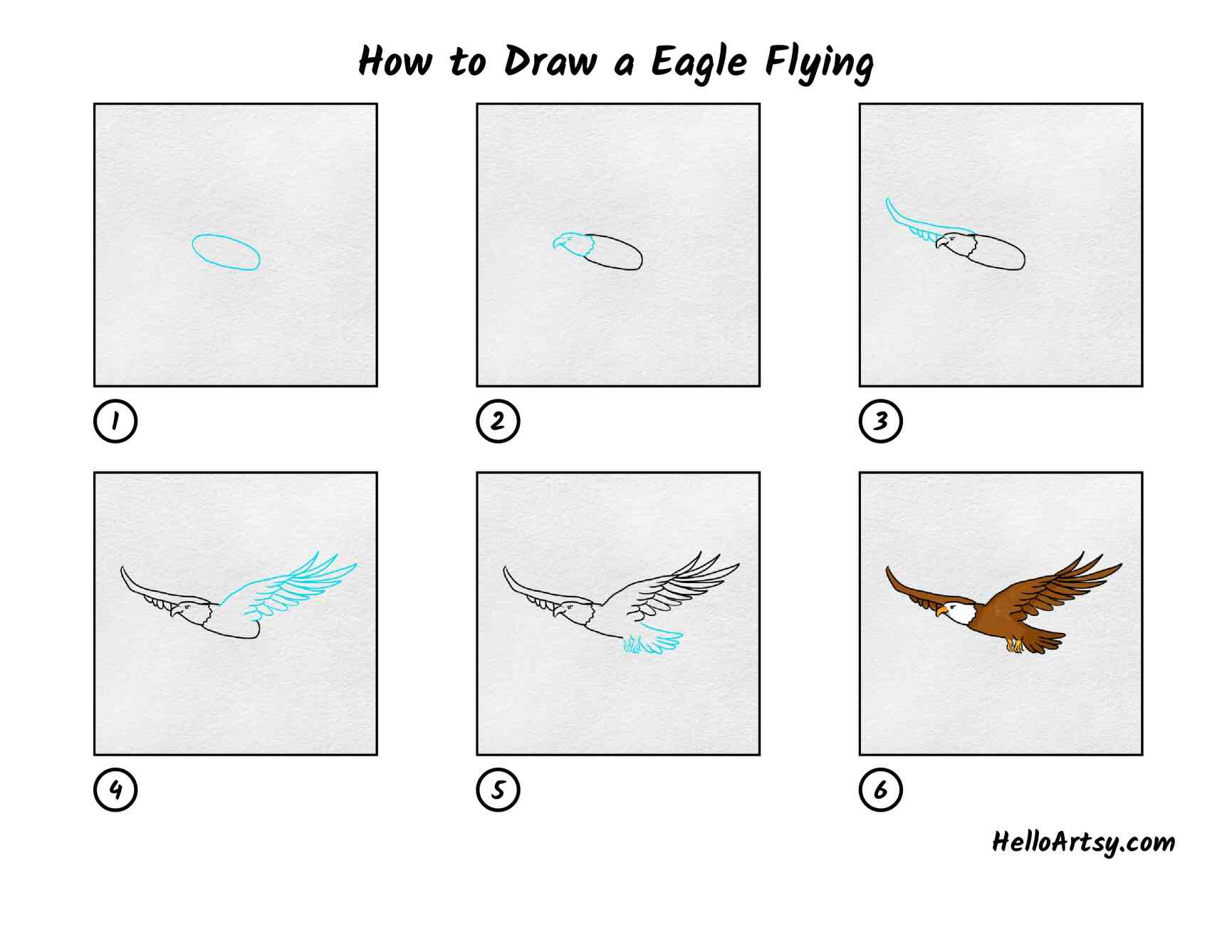 How To Draw A Eagle Flying: All Steps