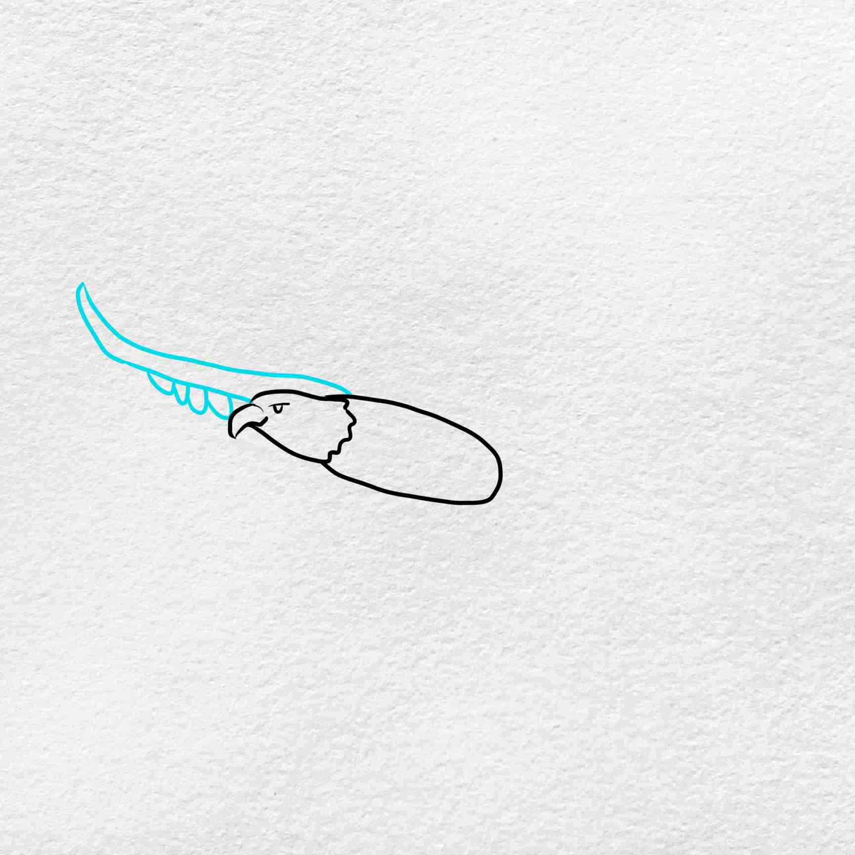How To Draw A Eagle Flying: Step 3
