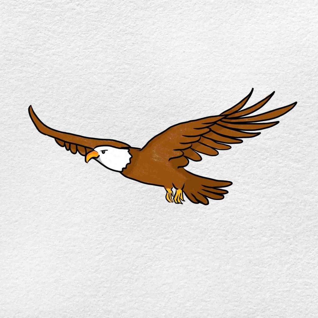How To Draw A Eagle Flying: Step 6