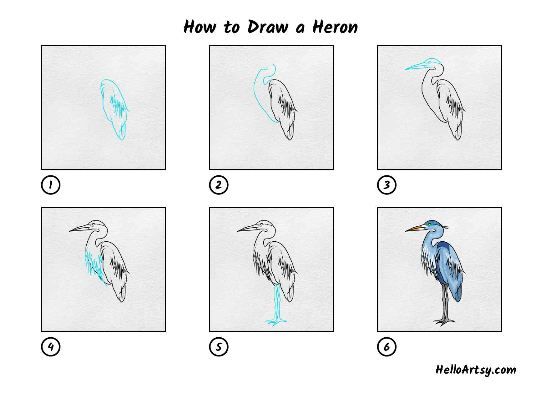 How To Draw A Heron: All Steps