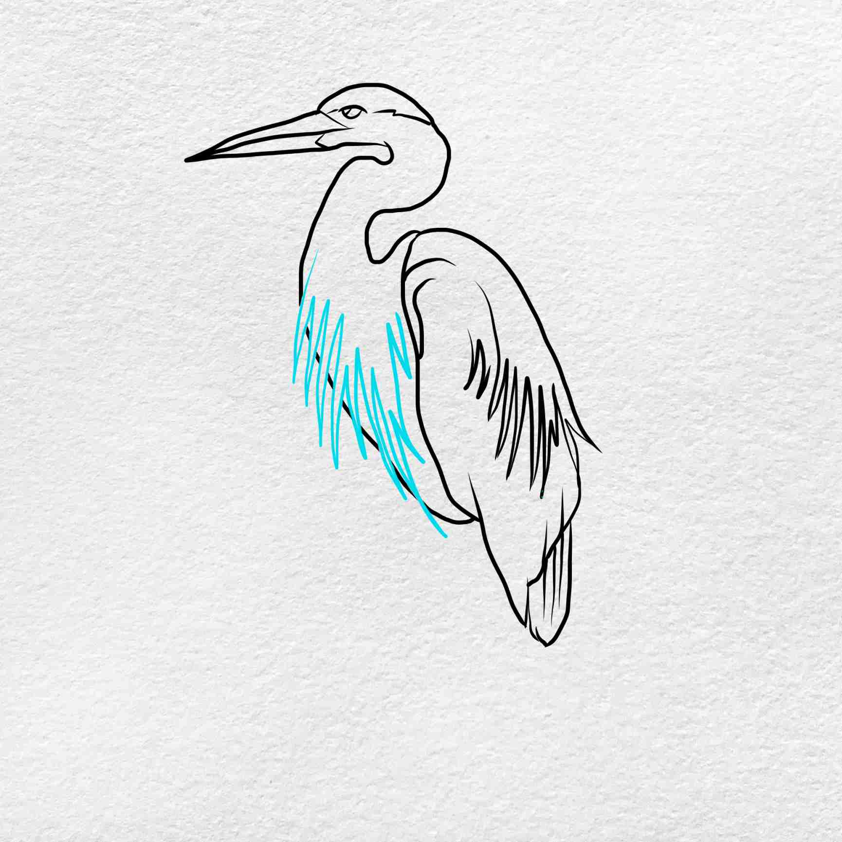 How To Draw A Heron: Step 4