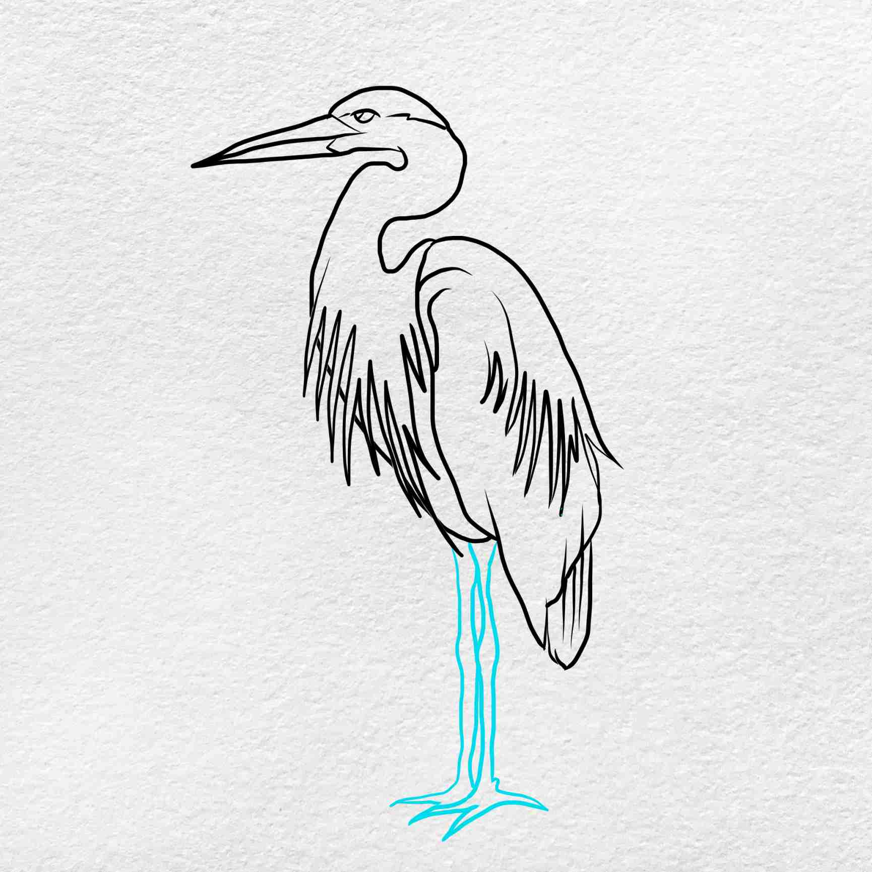 How To Draw A Heron: Step 5