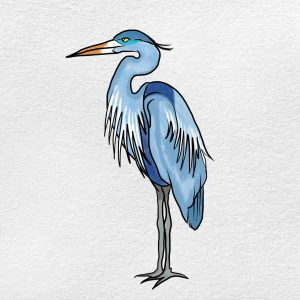 How To Draw A Heron: Step 6