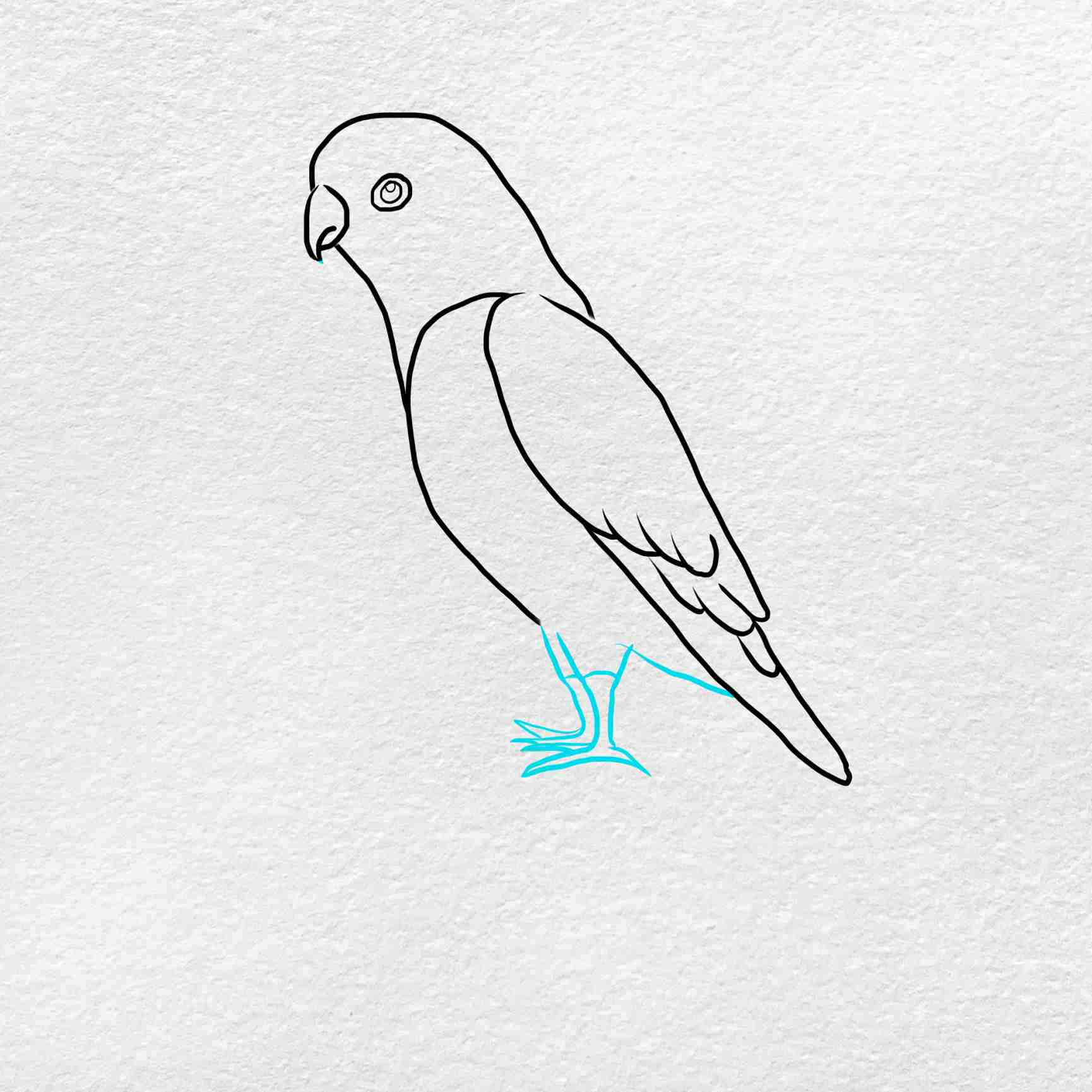 How To Draw A Parakeet: Step 5