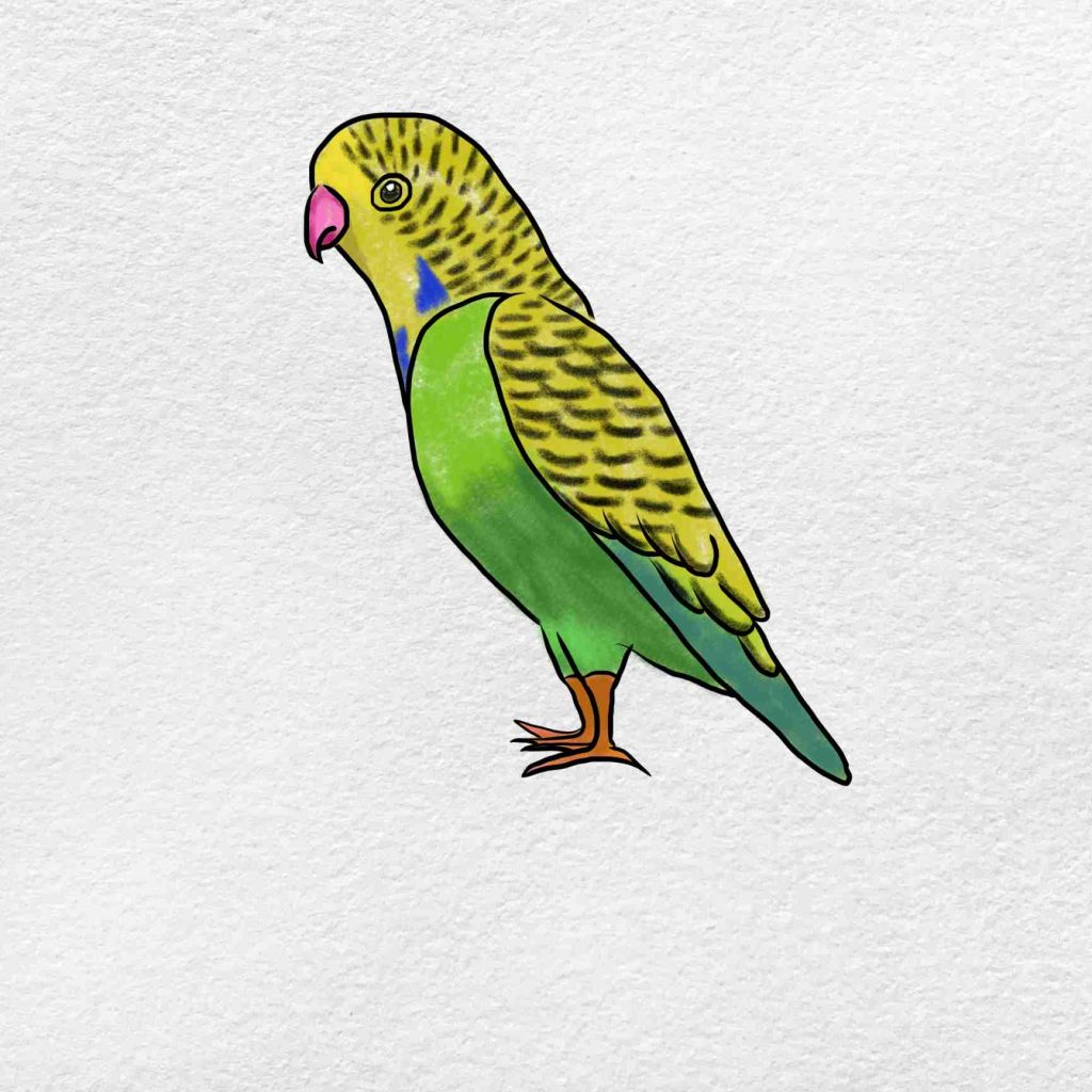 How To Draw A Parakeet: Step 6