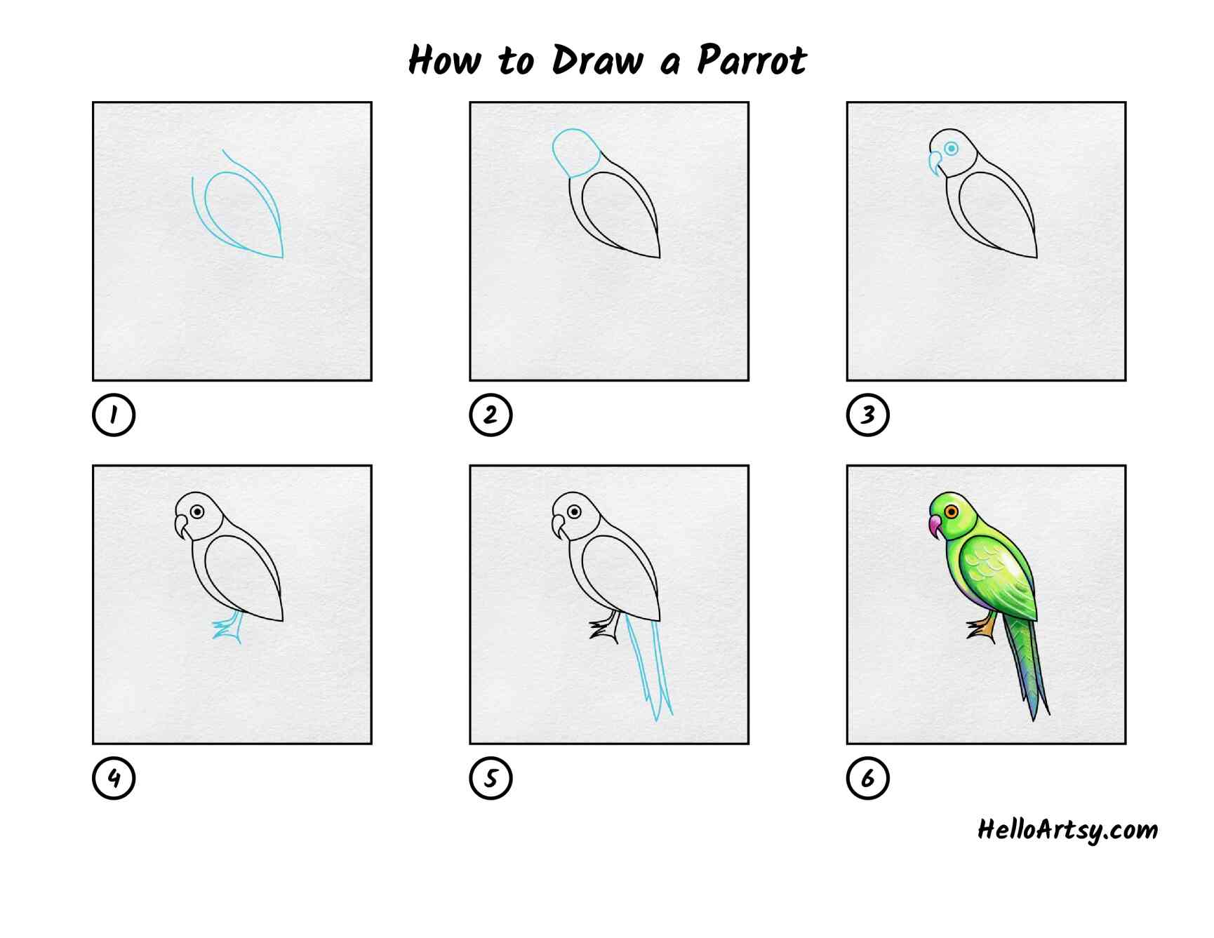 How To Draw A Parrot: All Steps
