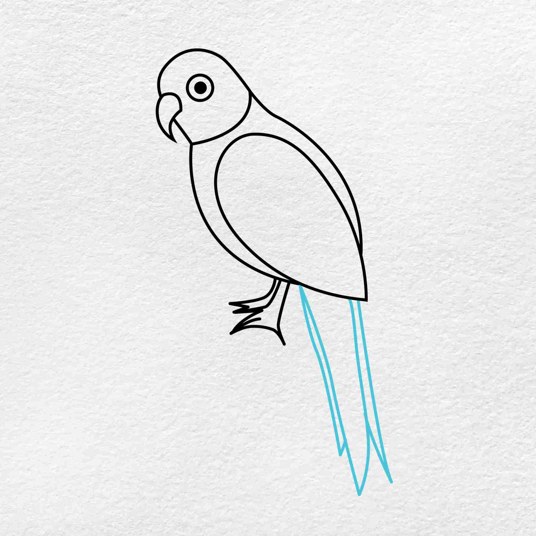 How To Draw A Parrot: Step 5