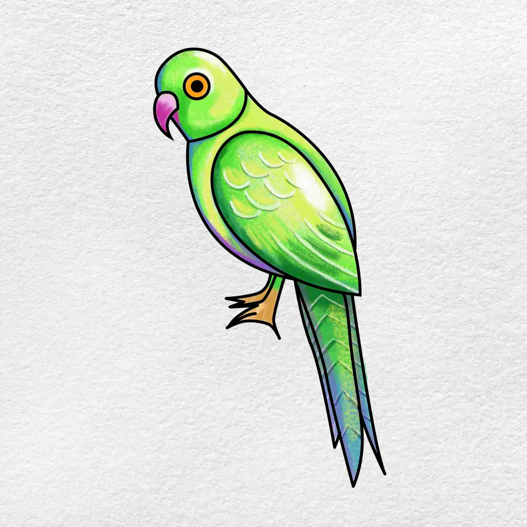 How To Draw A Parrot: Step 6